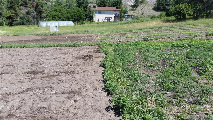 The block on the right was prepared and then left for four weeks. Same for the block on the left, only we also tarped it. All the weeds germinated under the tarp, and then died. It's a form of weed management.