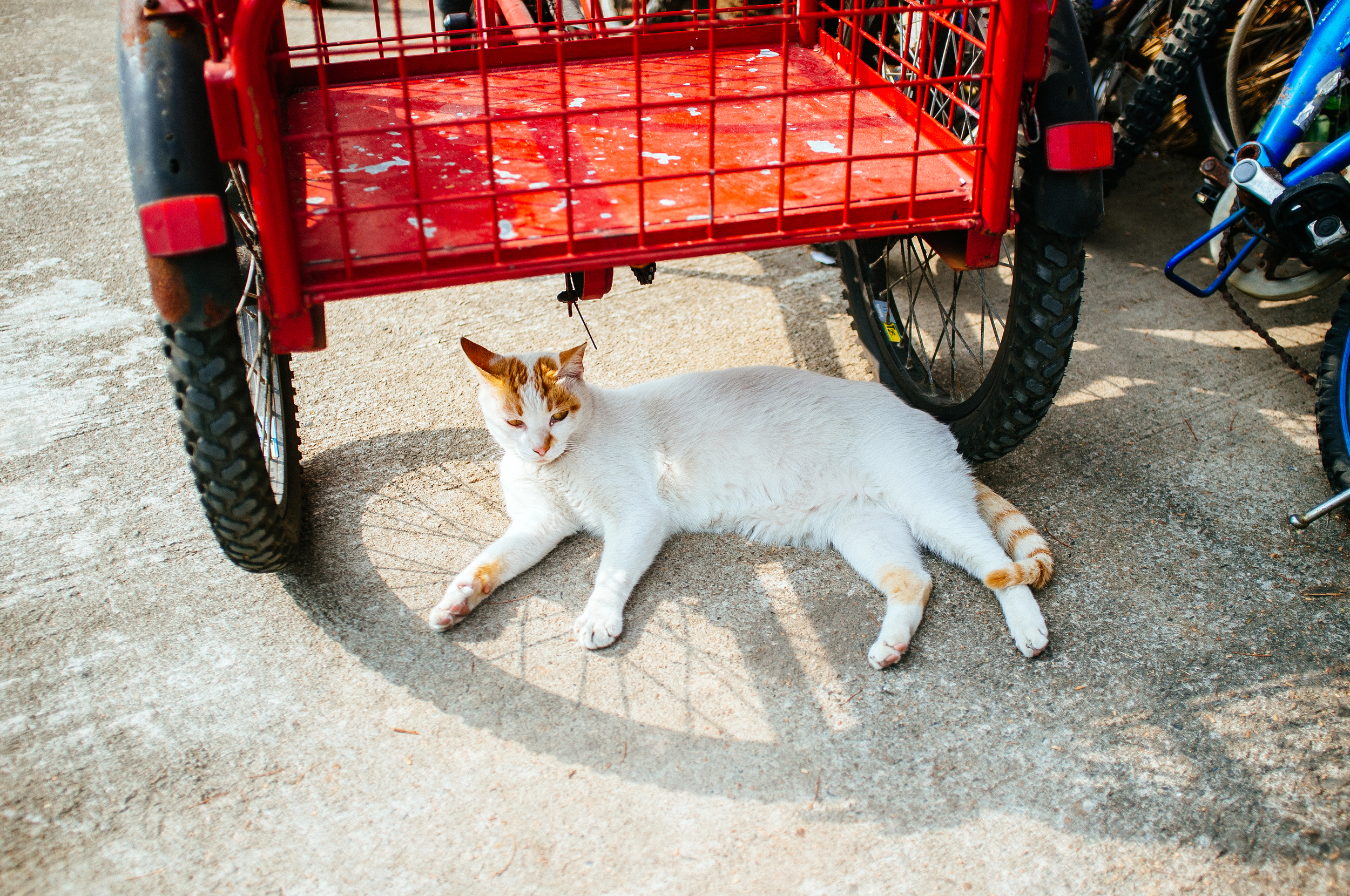 Peng Chau Cat.jpg