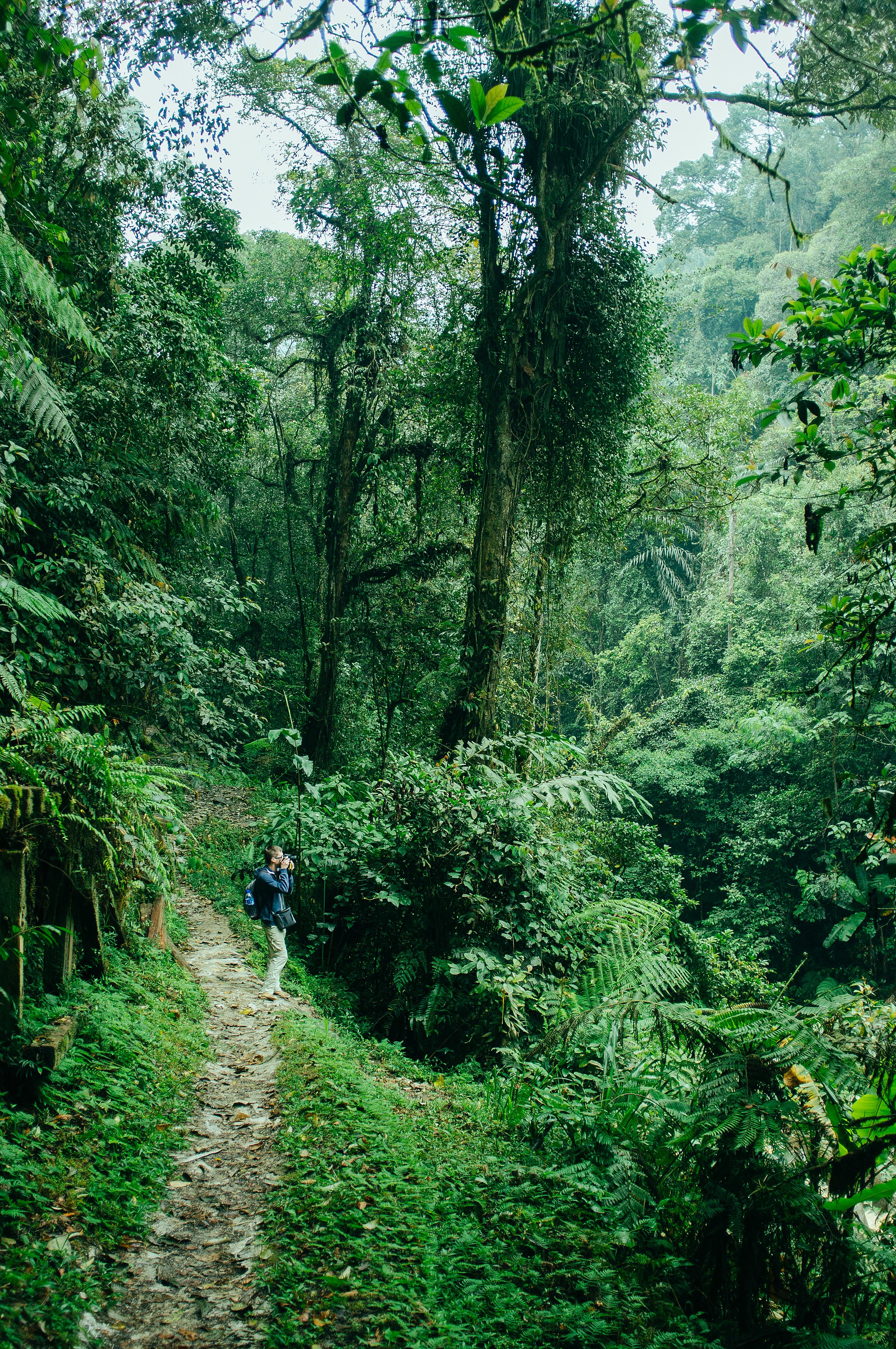 Cameron Highlands Jungle Trail.jpg