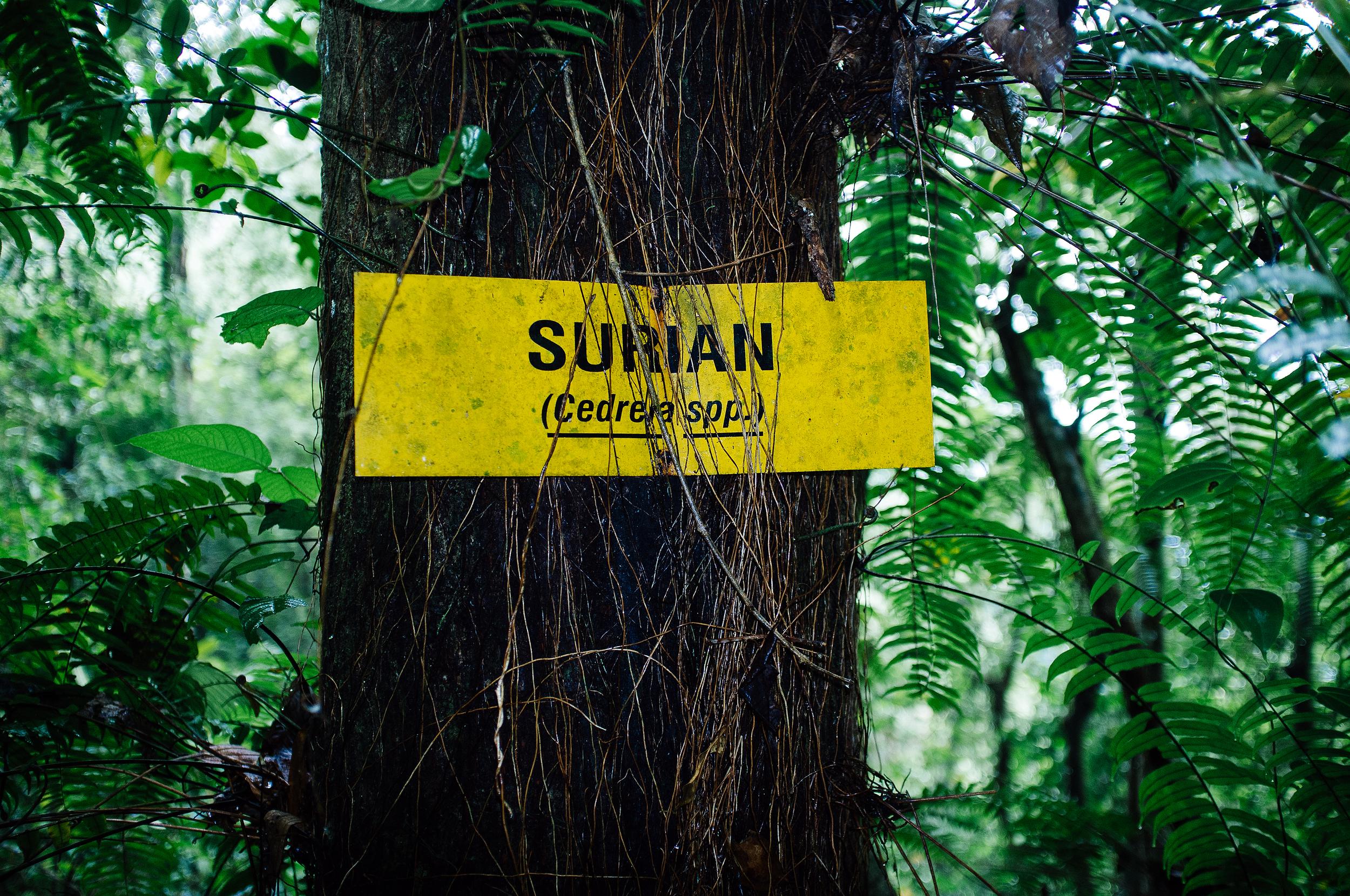 Cameron Highlands Tree Sign.jpg