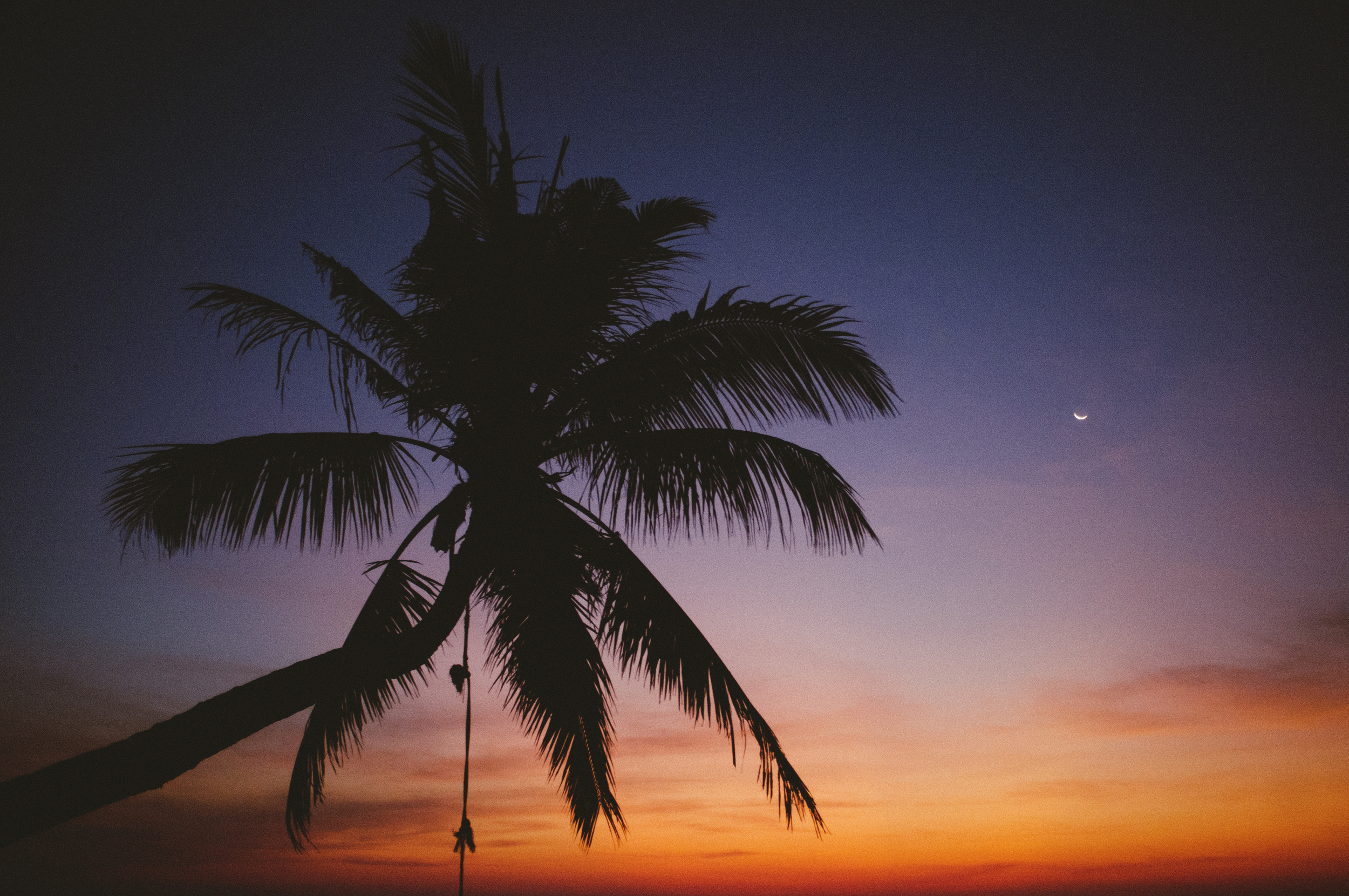 Koh Tao Palm Tree Sunset.jpg