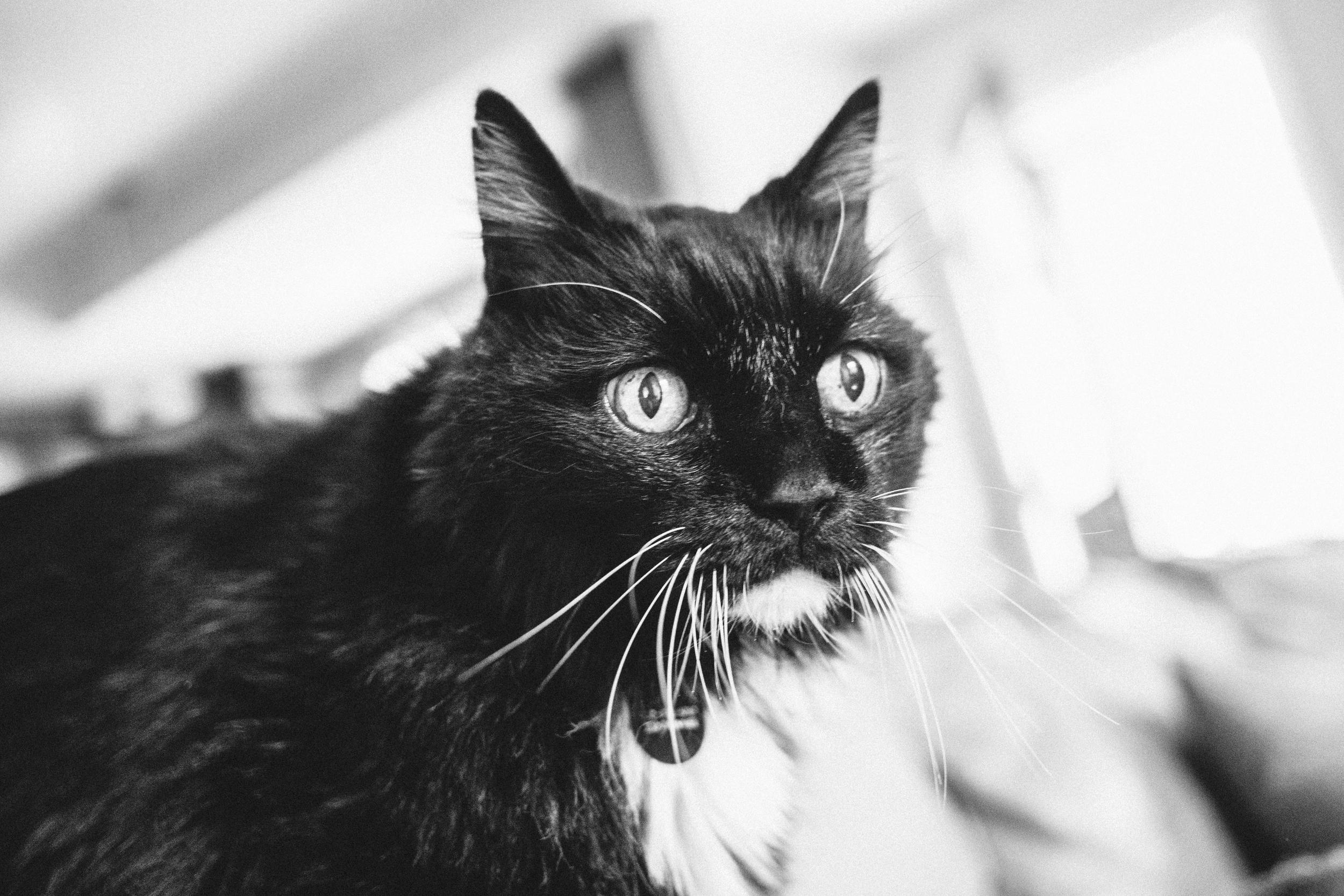 Henry Kitten 2.jpg