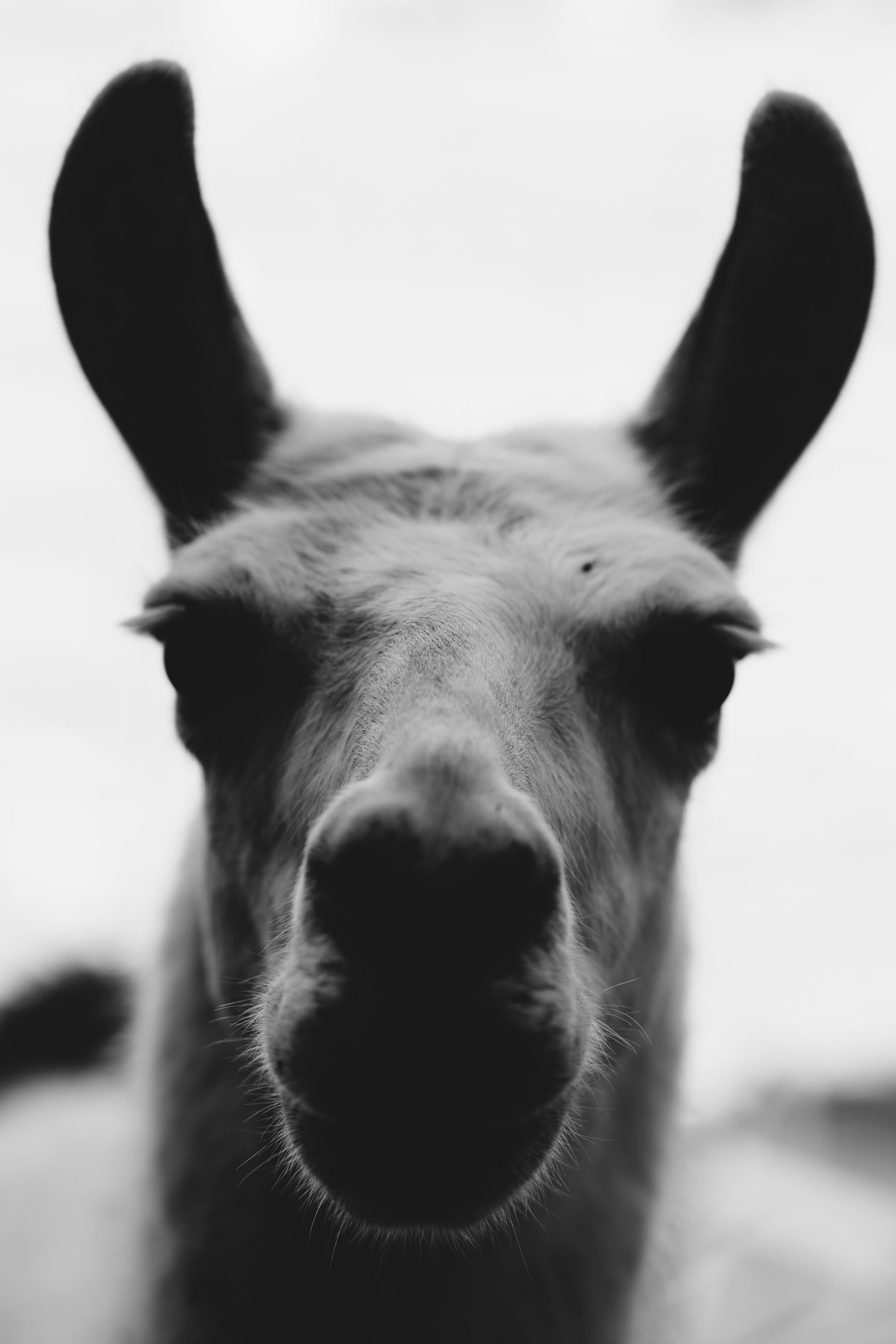 Llama / Plant Eating Shithead