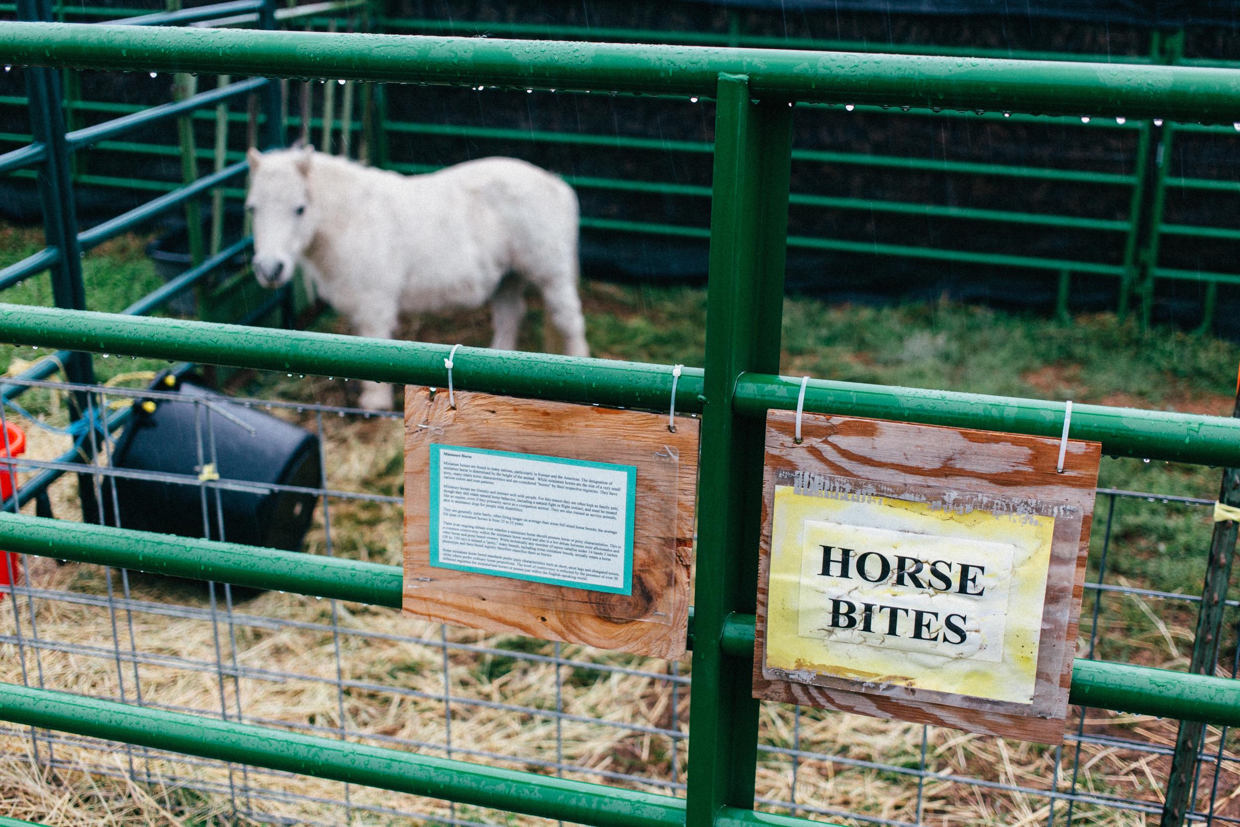 Horse Bites.jpg
