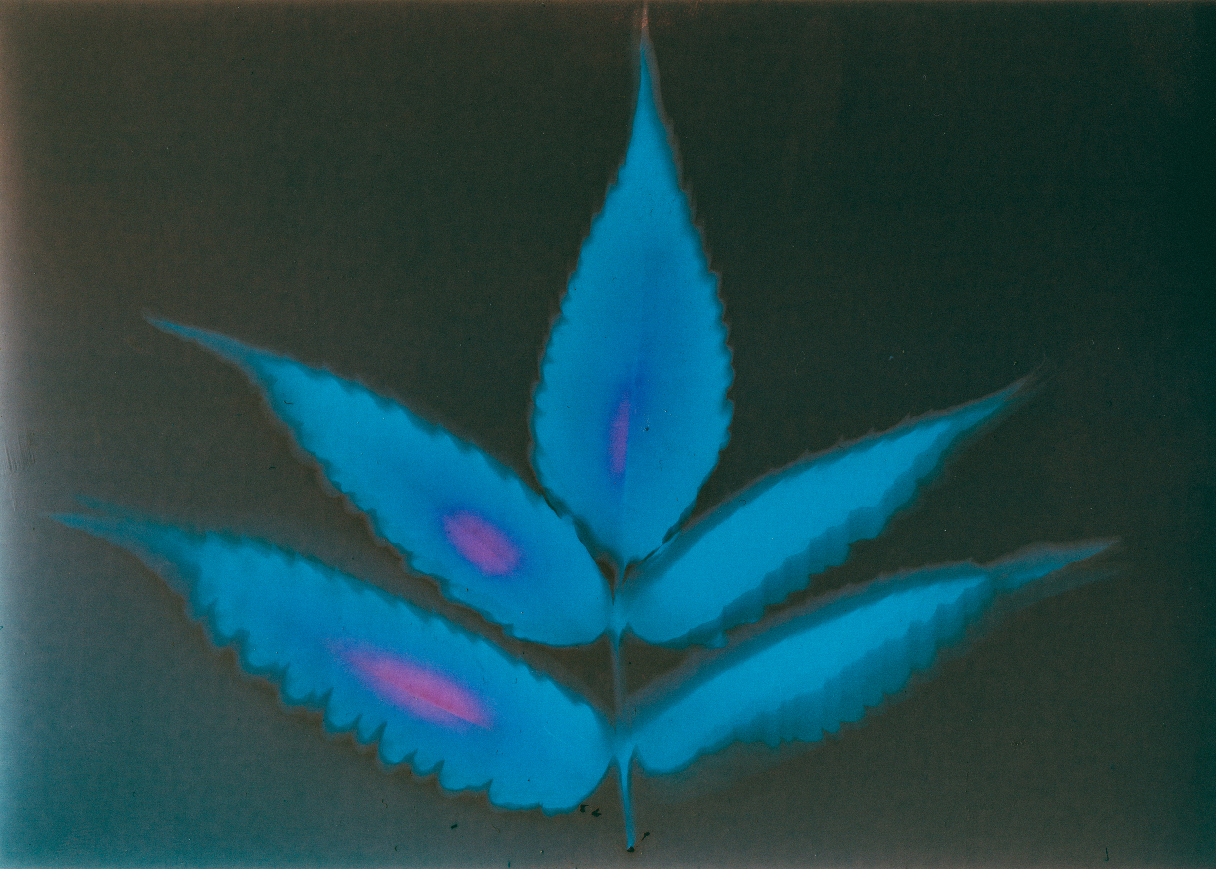 Plant Photogram 2.jpg