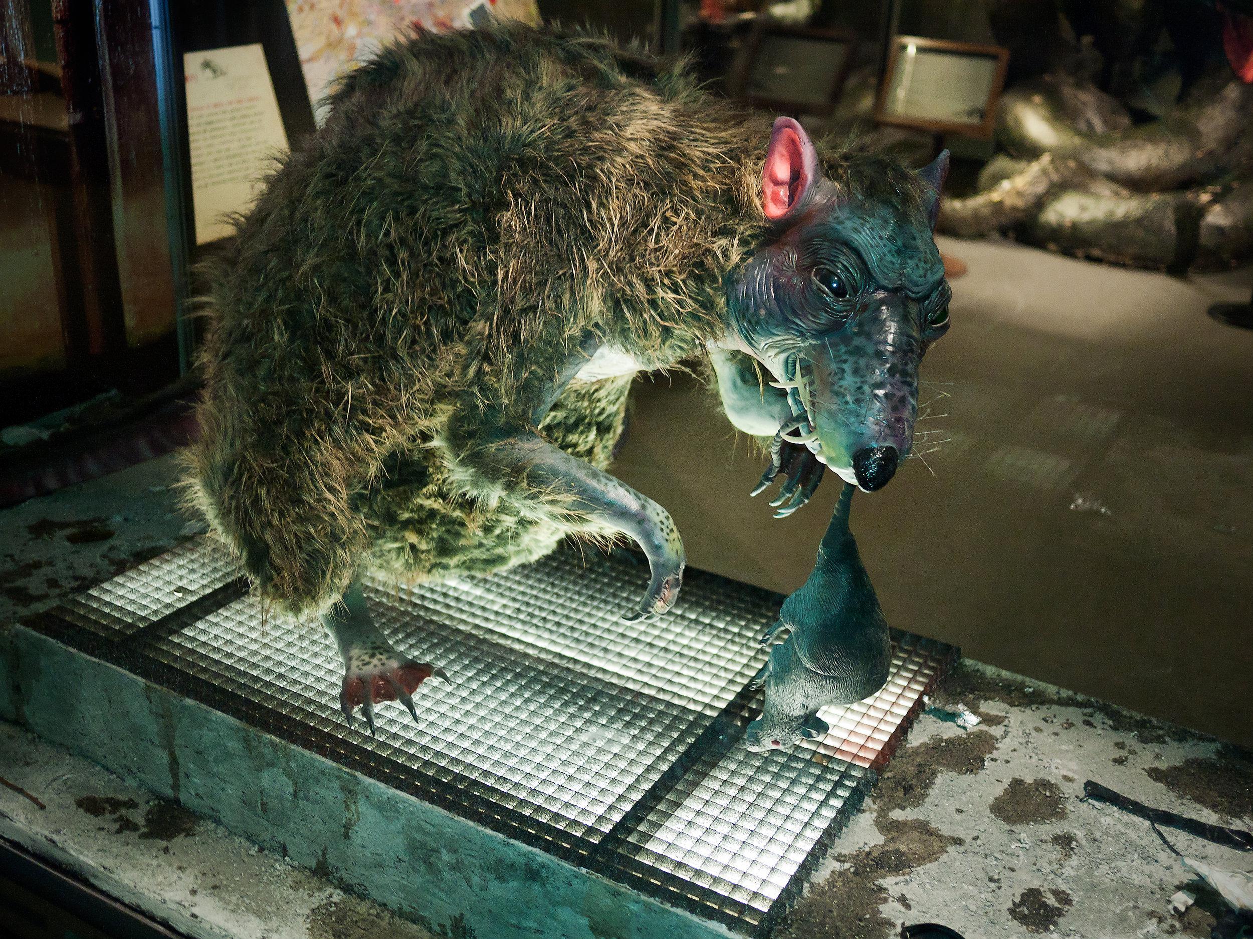 Evil Rat.jpg