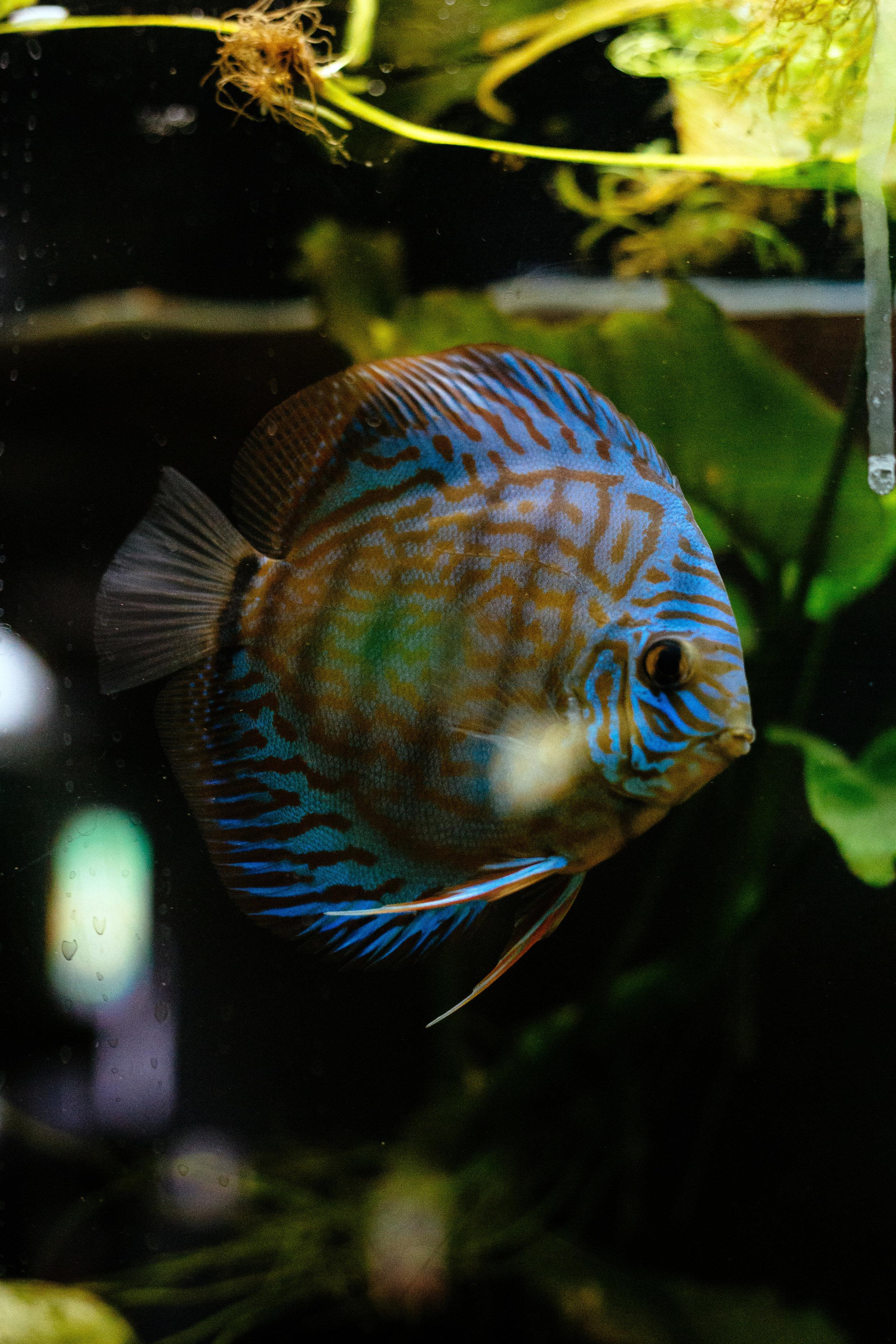 Fish Den 5.jpg