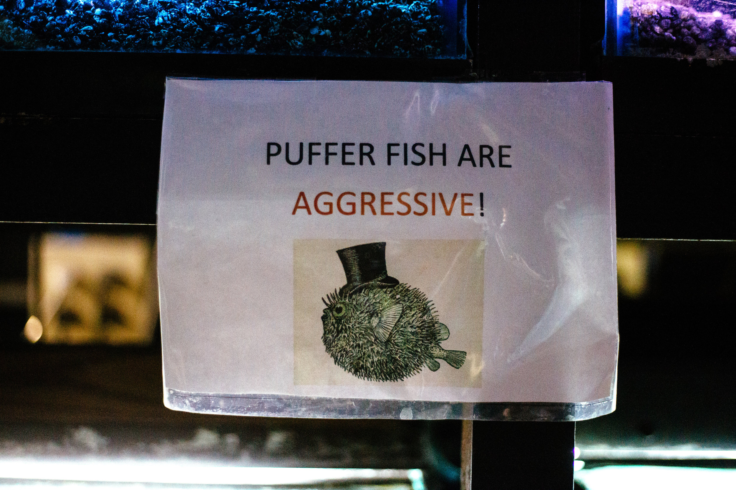 Fish Den 10.jpg