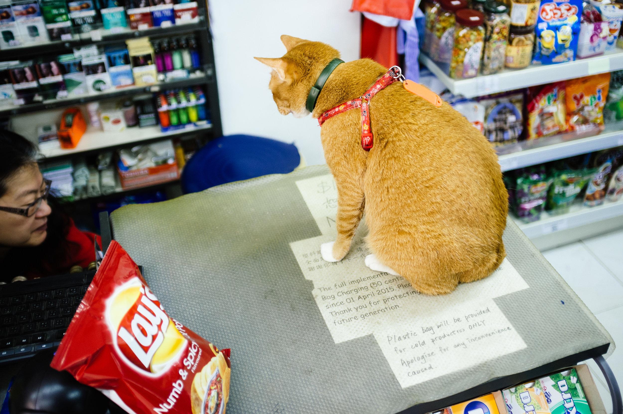 Lamma Store Cat.jpg