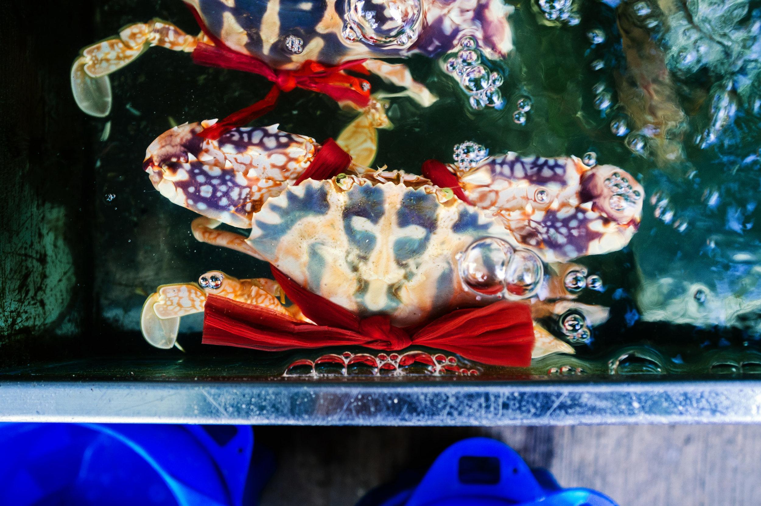 Lamma Island Crab.jpg