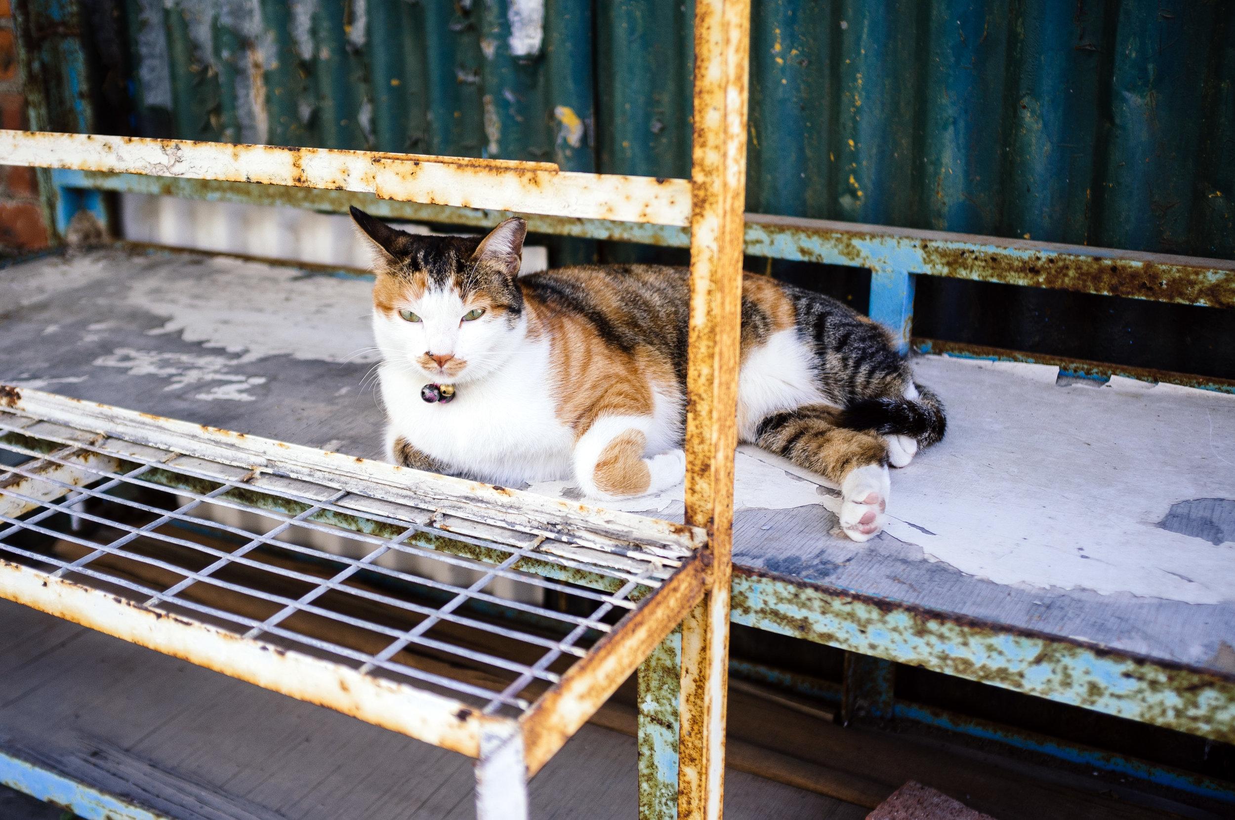 Lamma Street Cat.jpg