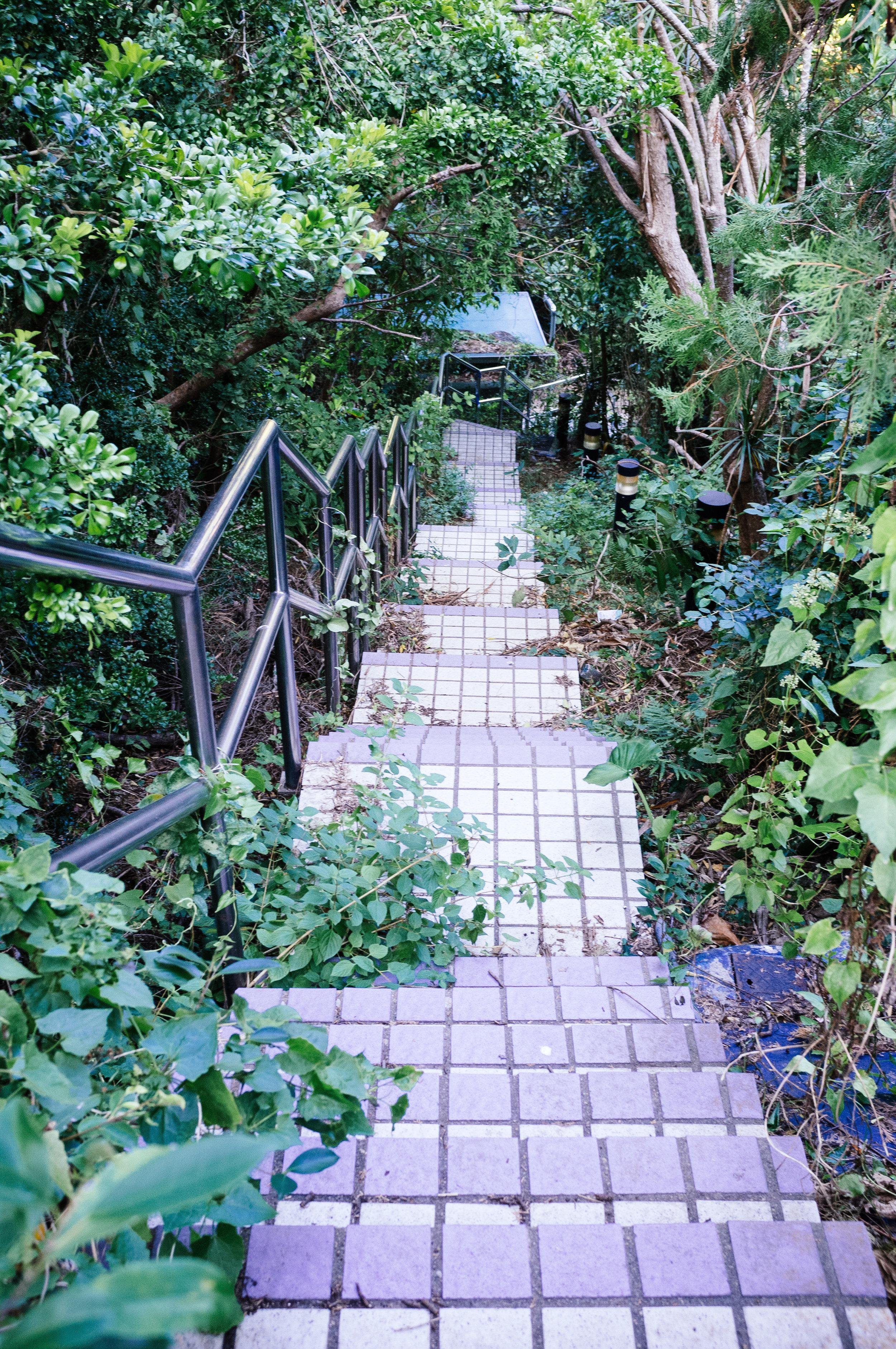 Lamma Overgrown Path.jpg