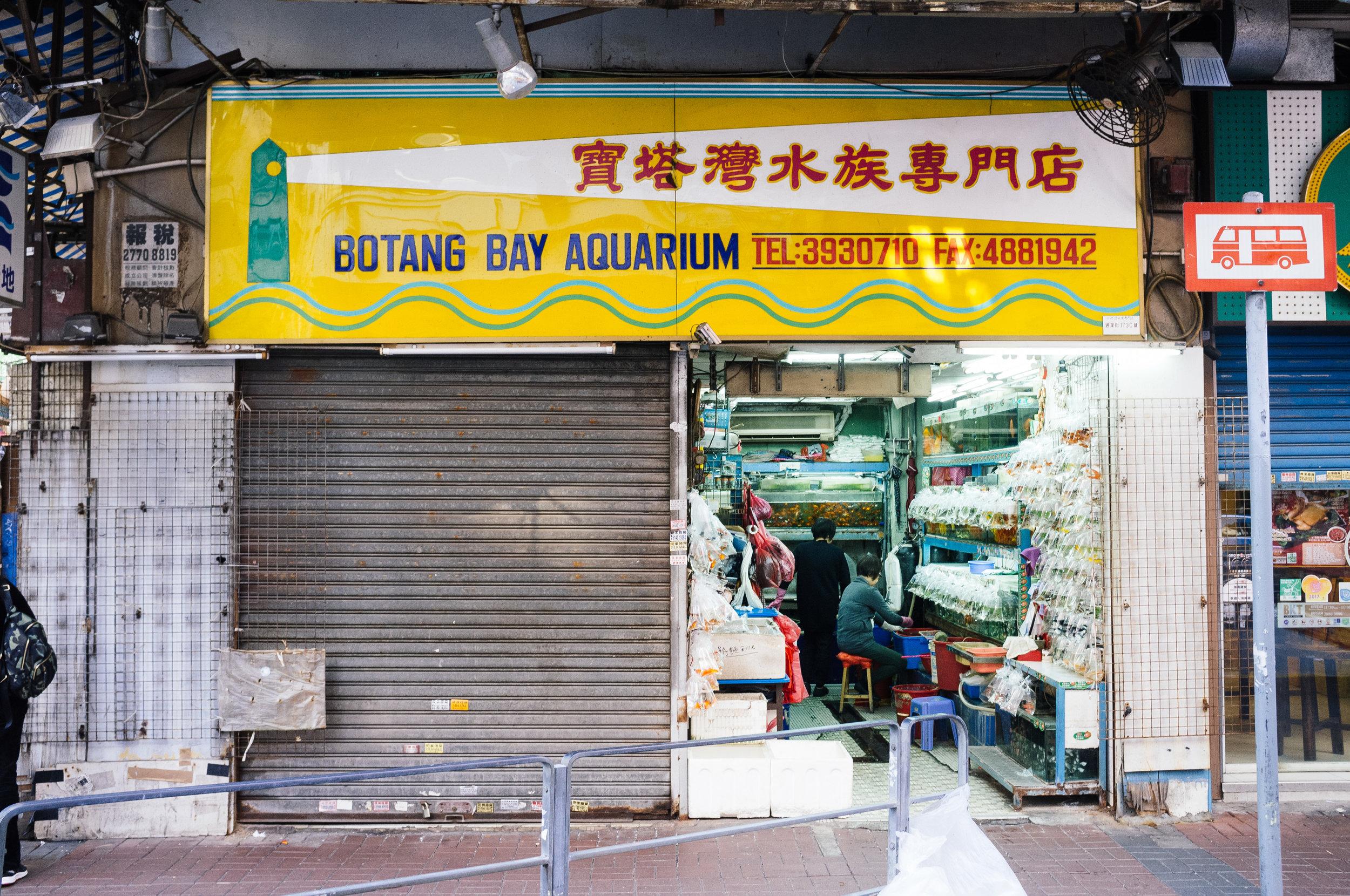 Mong Kok Aquarium.jpg