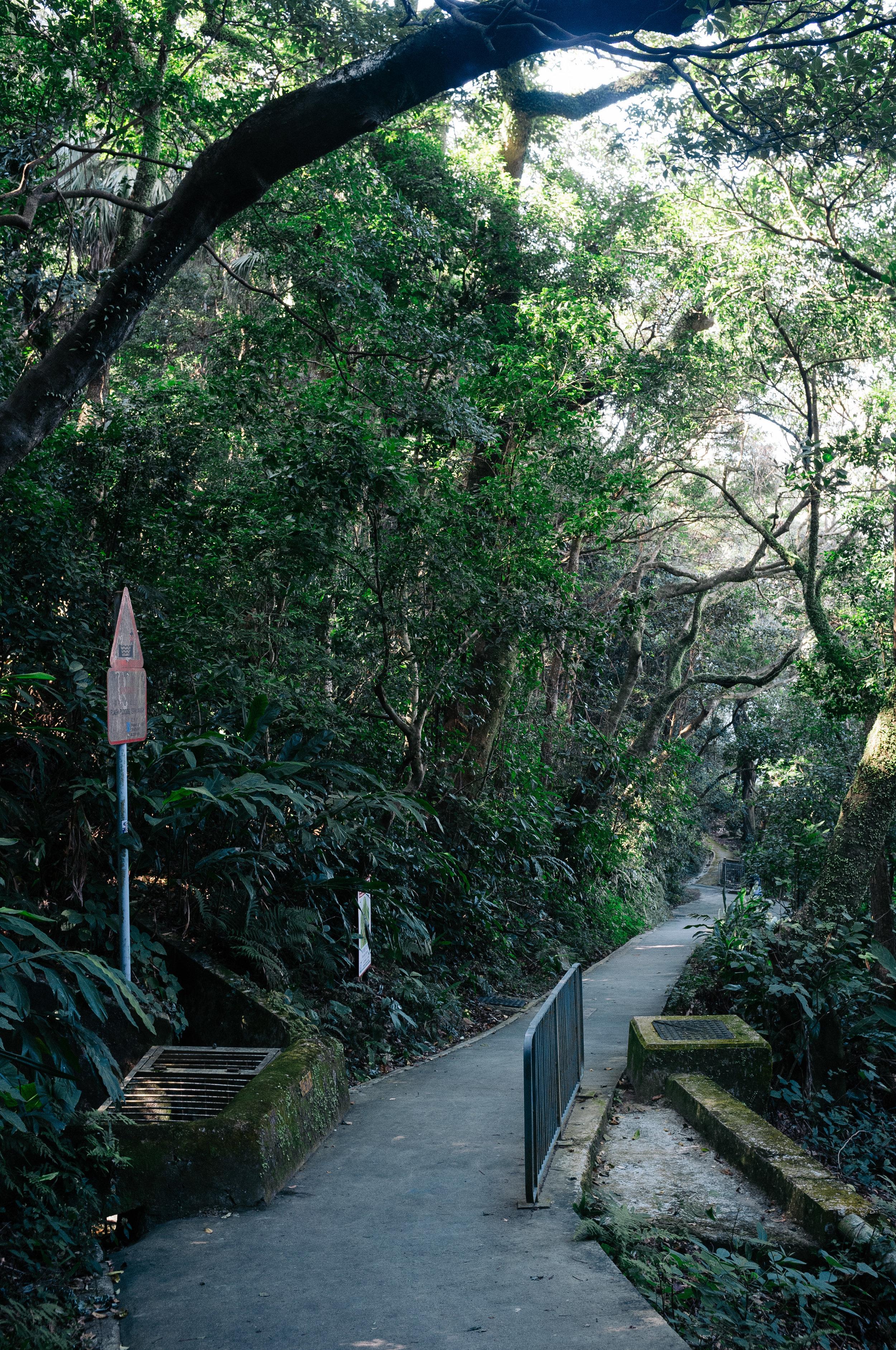 Victoria Peak Path 1.jpg