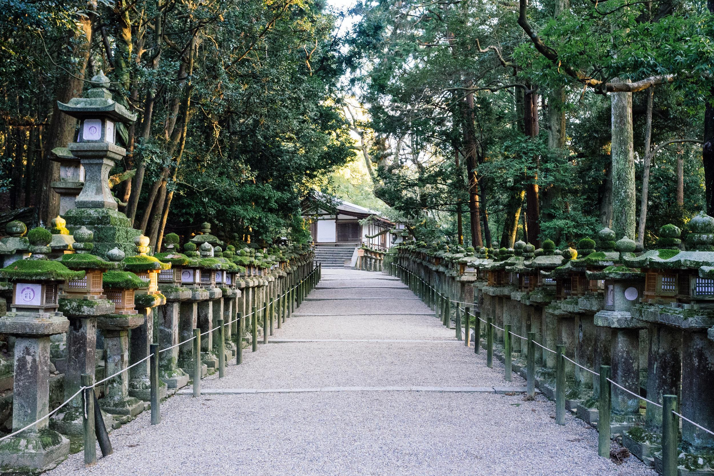 Nara Path.jpg