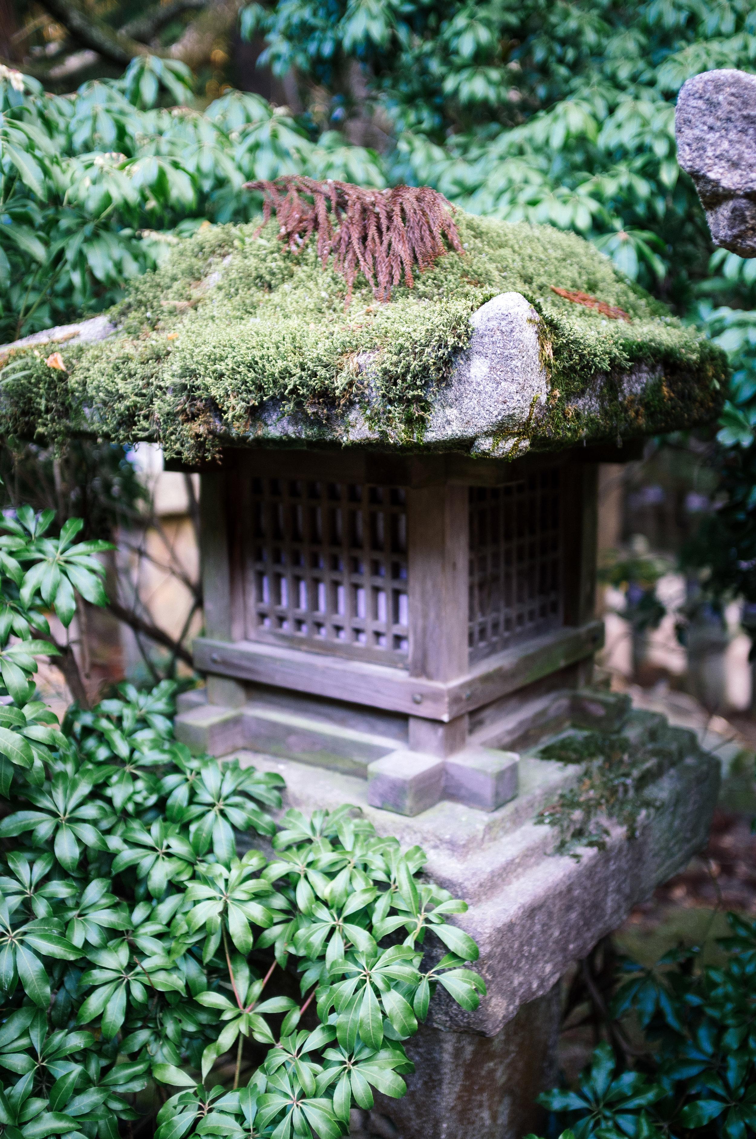 Nara Plants.jpg