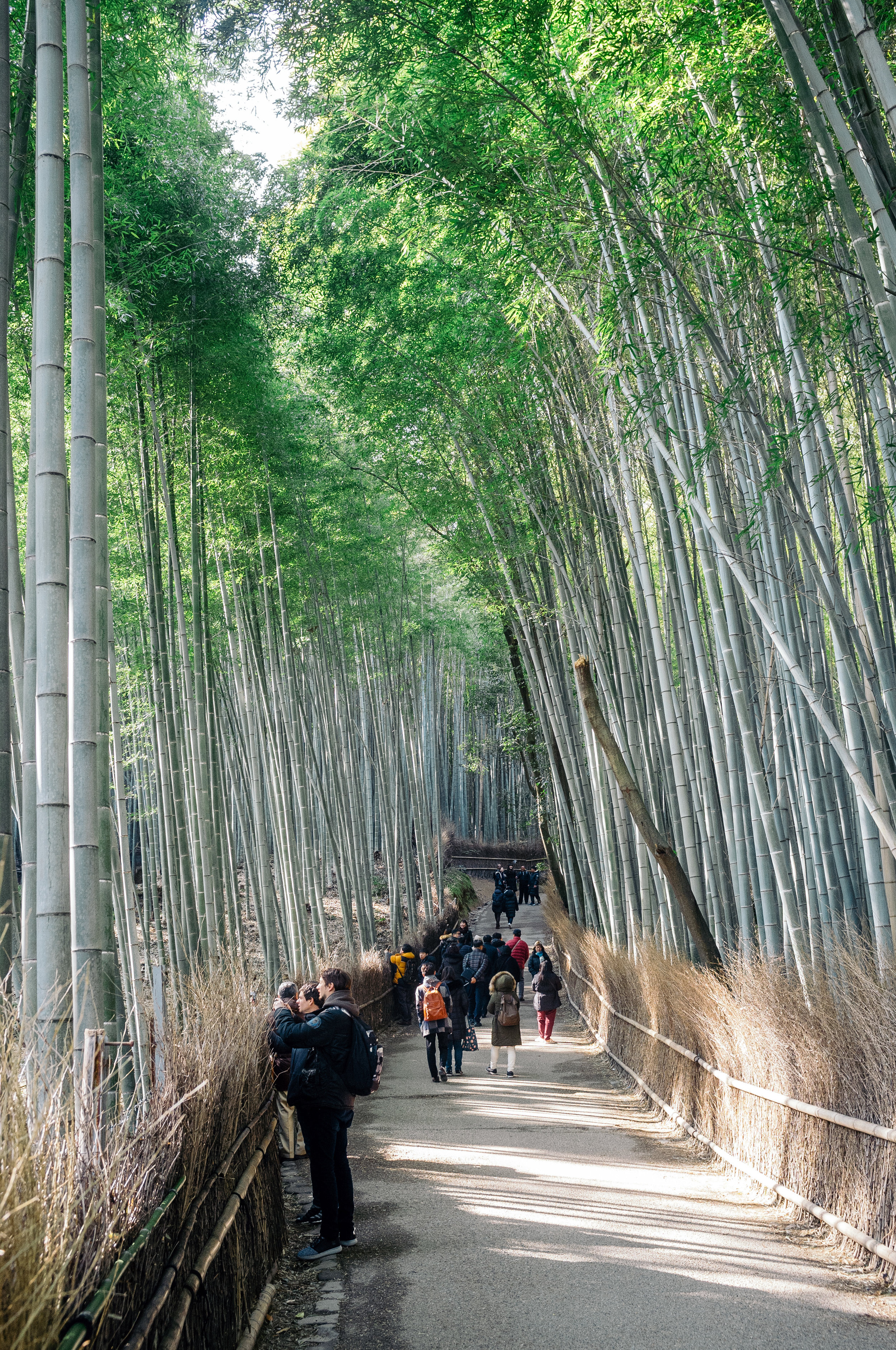 Kyoto Arashiyama 1.jpg