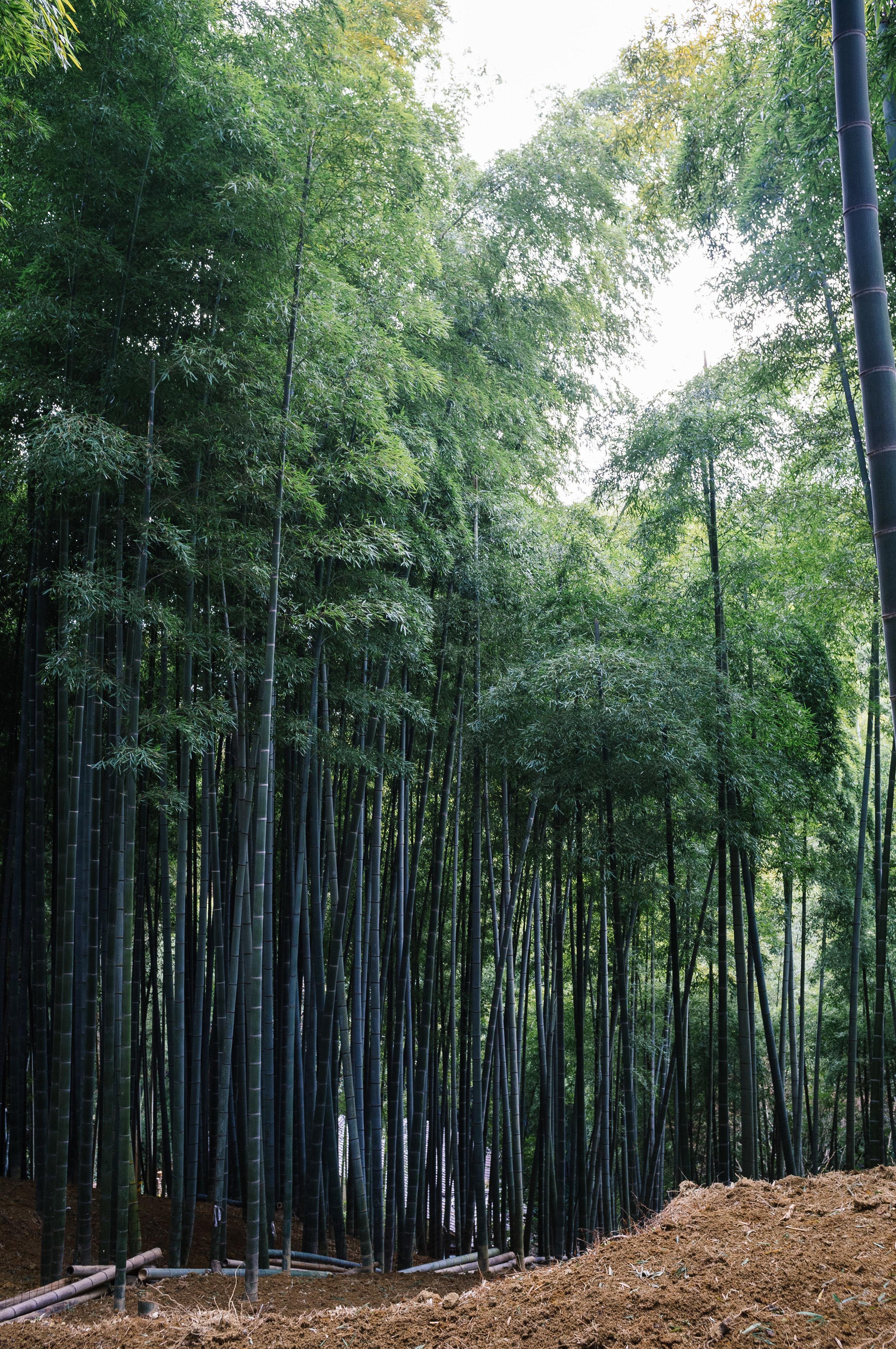 Inari 4.jpg