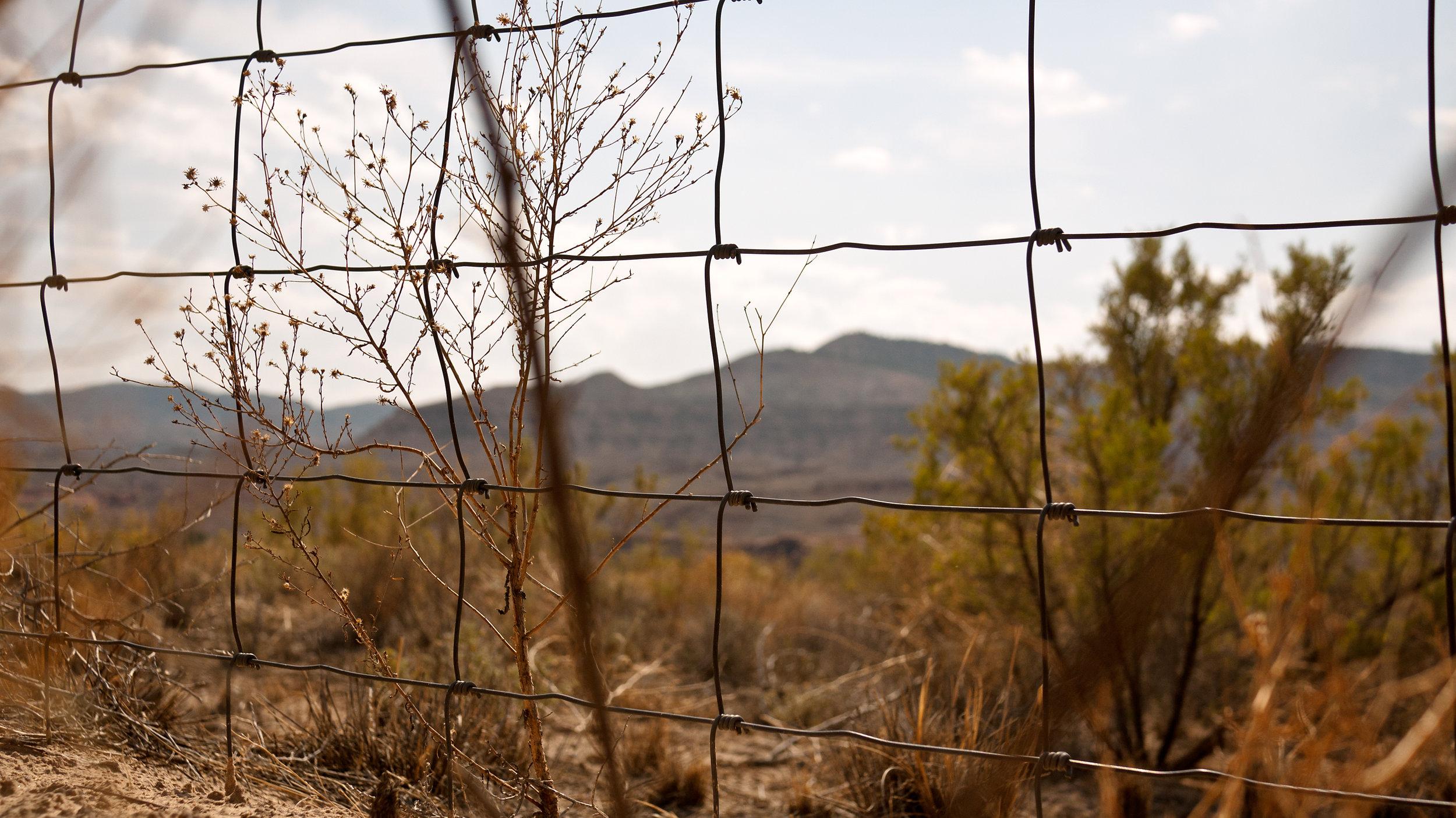Desert Fence.jpg