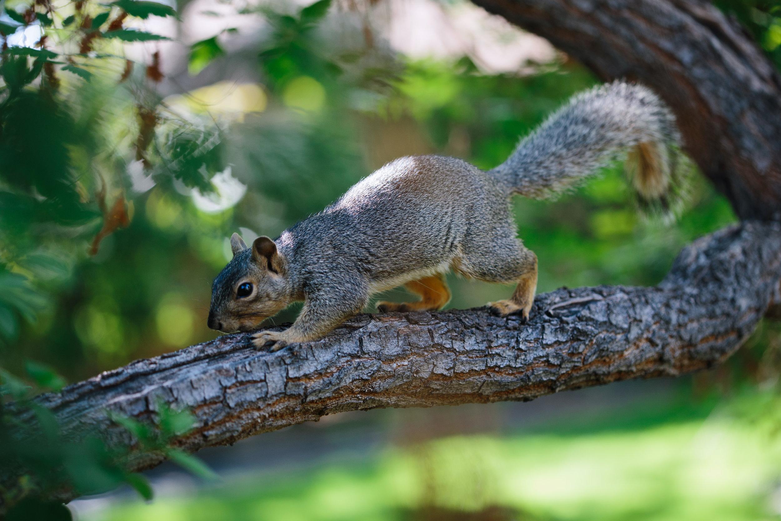 Squirrel backyard 2.jpg