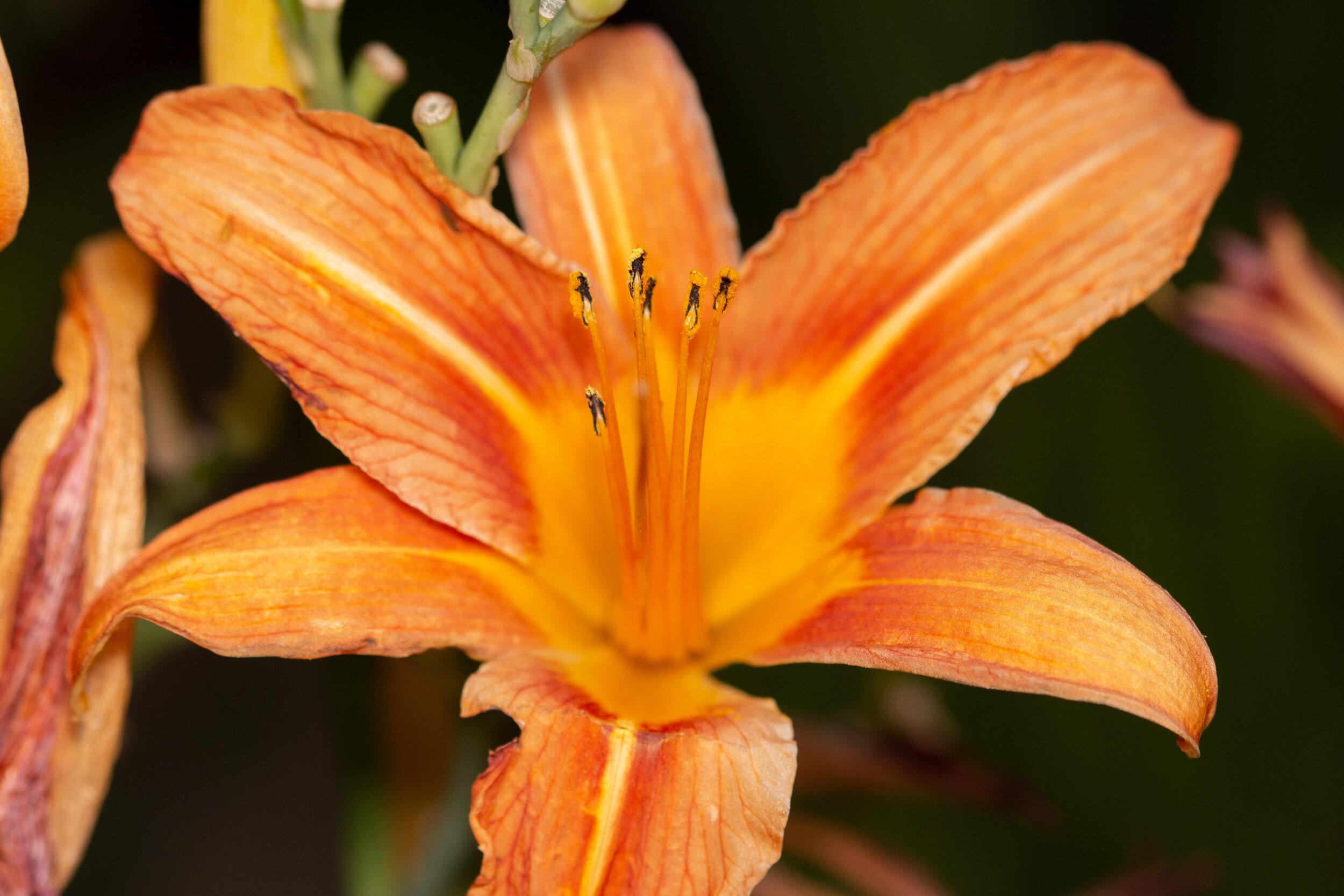 Macro Flower.jpg
