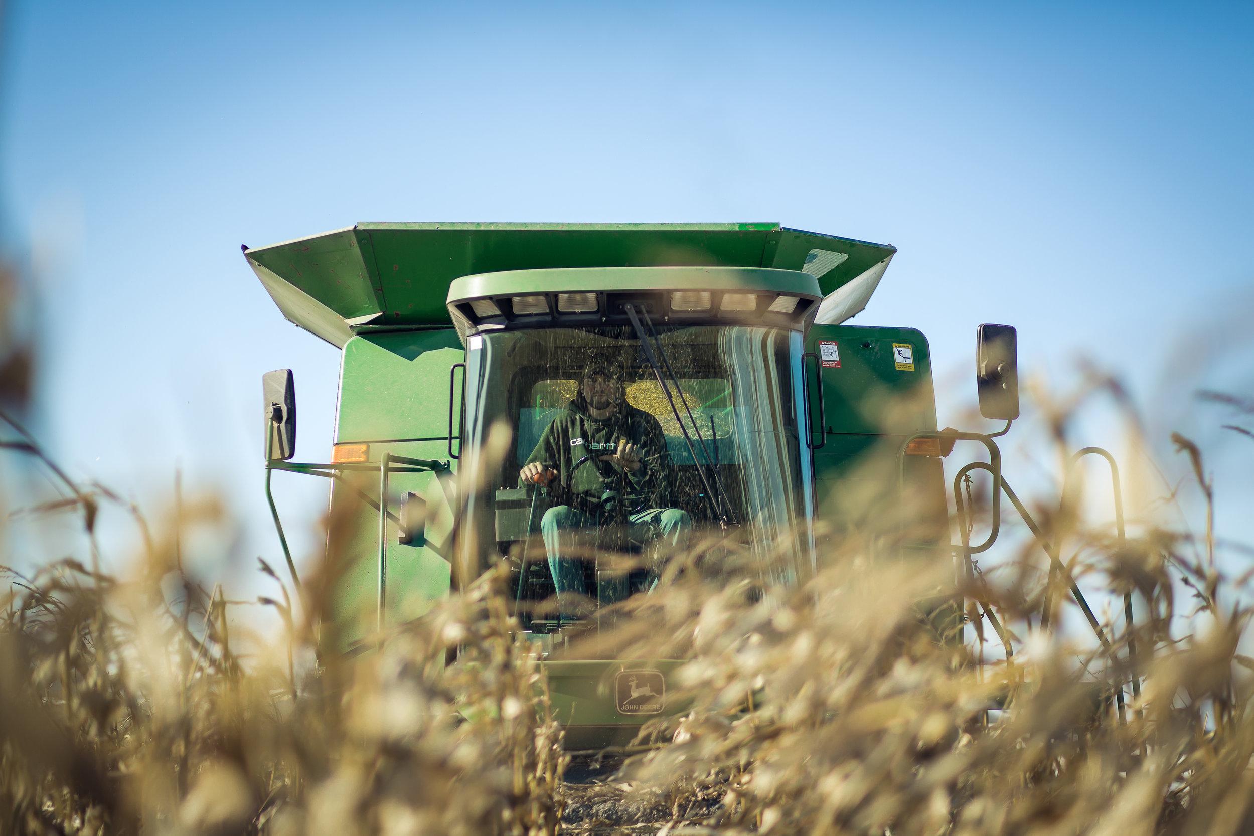 Corn_Harvest_11-14-2014-5235.JPG