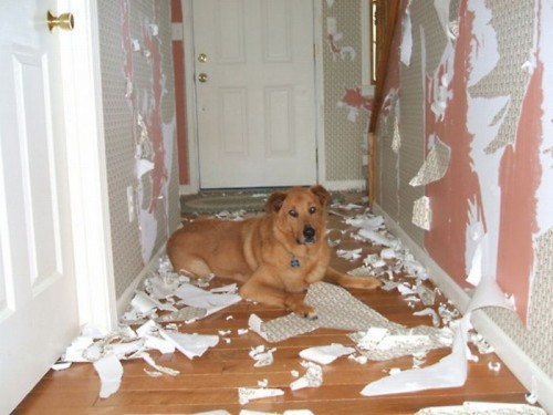 dog wrecks house.jpeg