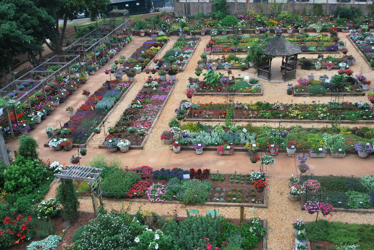 New plants are trailed for outdoor performance around the world so that breeders and end users know that new plants not only look good at retail but also perform well in the landscape