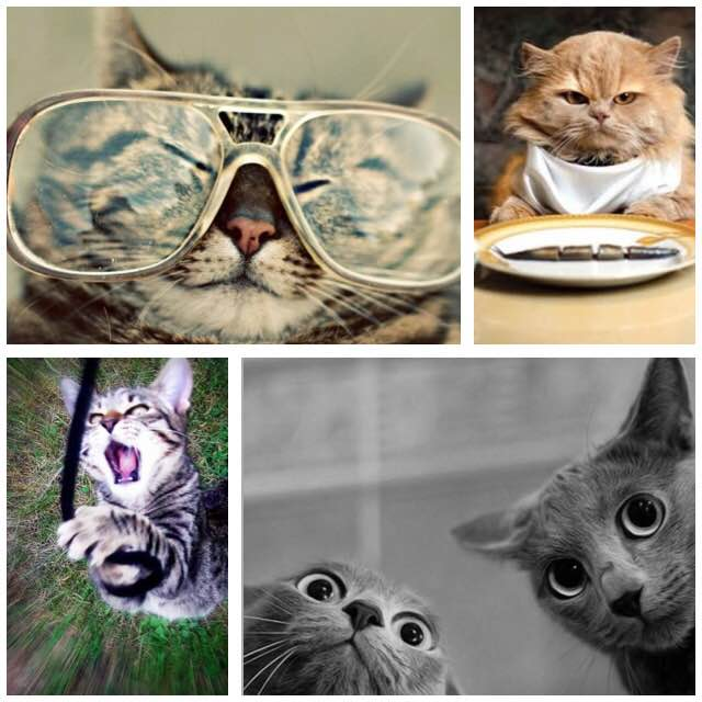 Cat Videos and Marketing Ideas