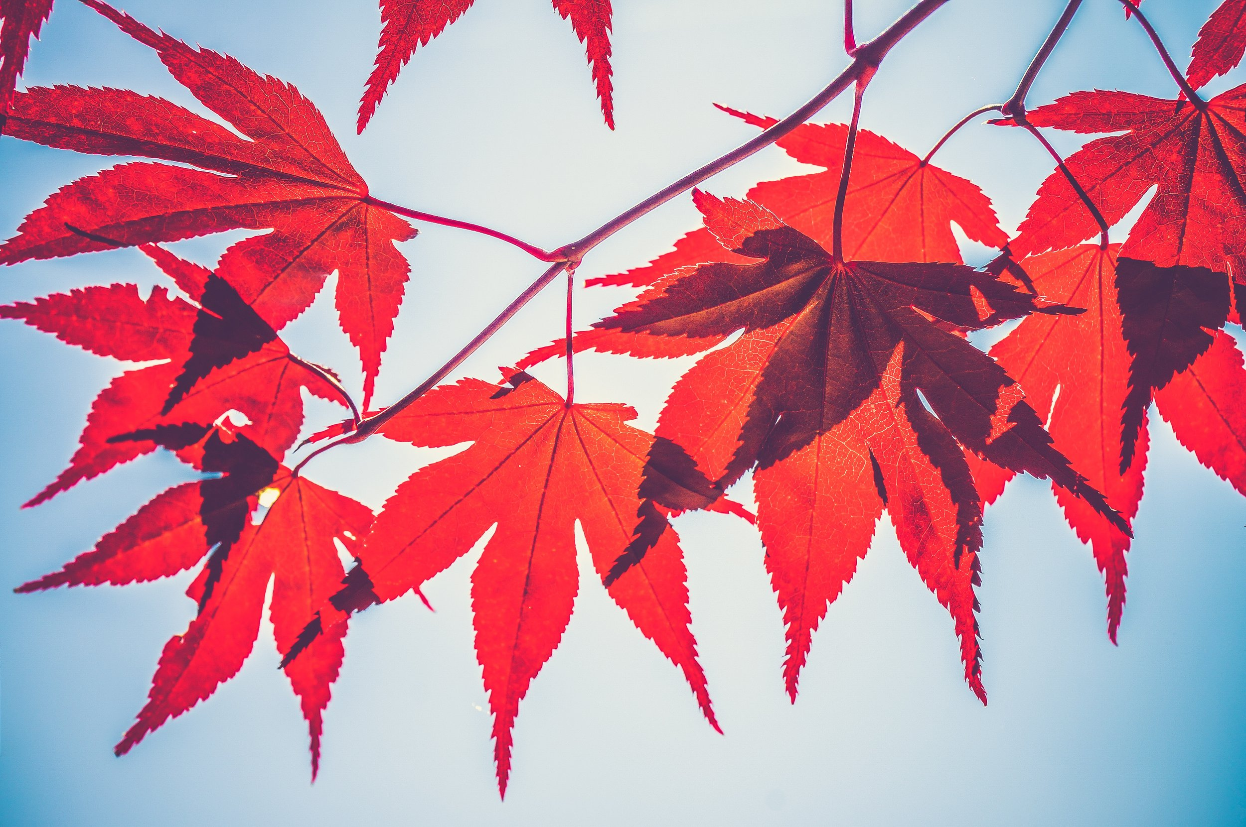 Why Leaves Change