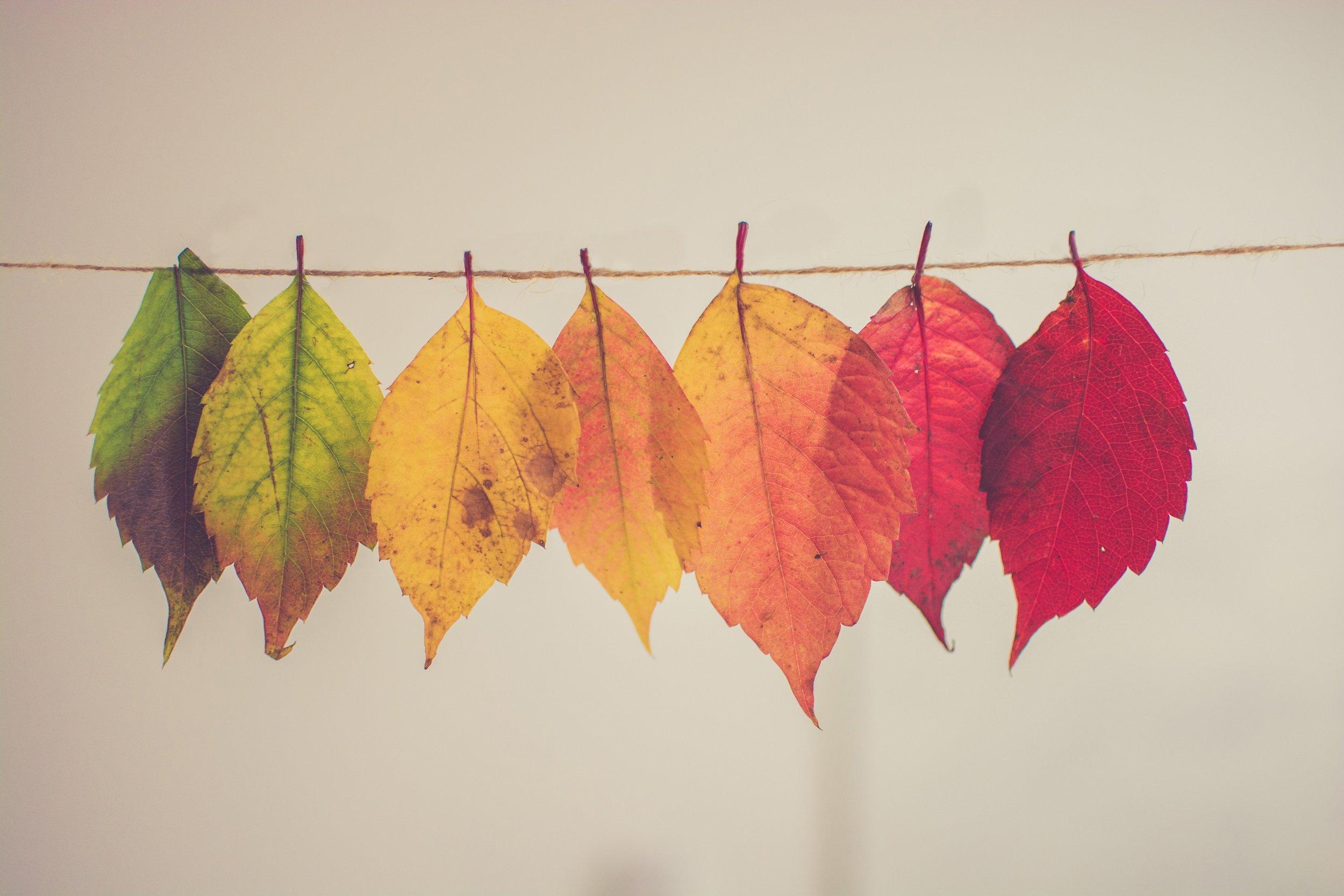 Thoreau's Autumnal Tints