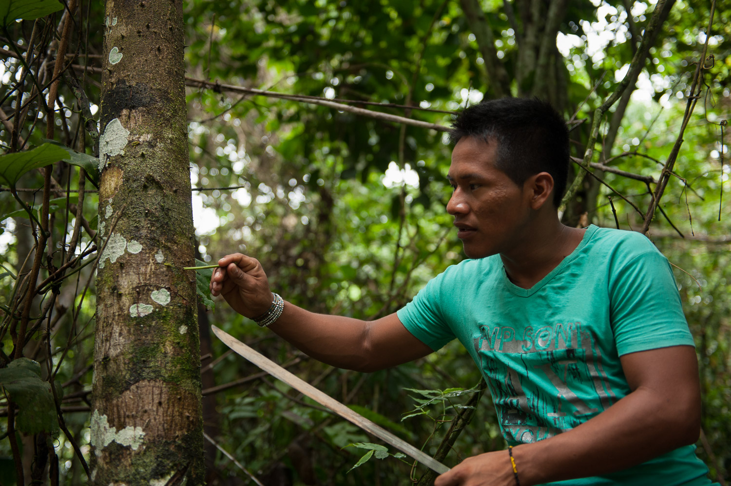 Tapullima's son, Hernando, leads eco-tours through the protected rain forest,showing how to extract the sap from a tree that serves as medicinal plant.