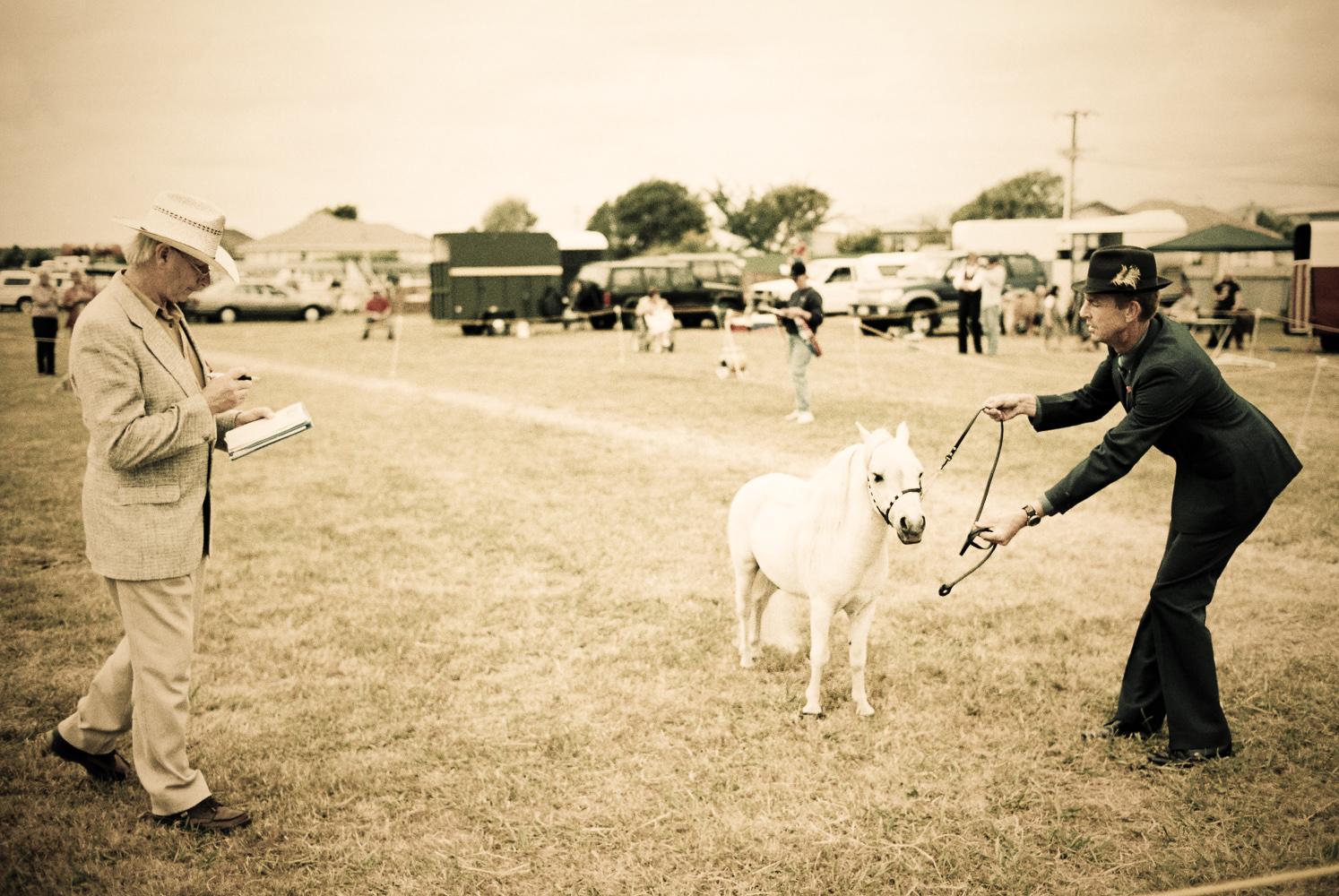 Miniature-Horse-Wellington-photographer-Paul-Fisher.jpg