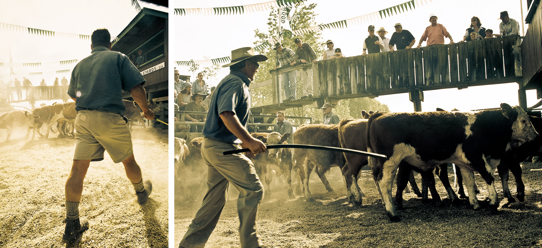 stock-sale-farm-Wellington-photographer-Paul-Fisher.jpg