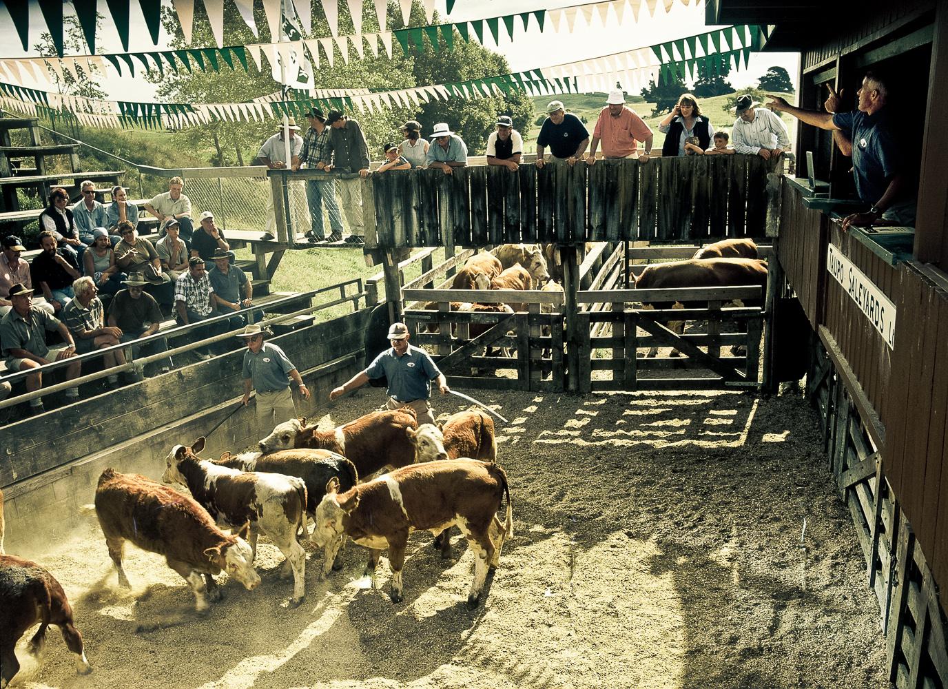 stock-yard-farm-Wellington-photographer-Paul-Fisher.jpg