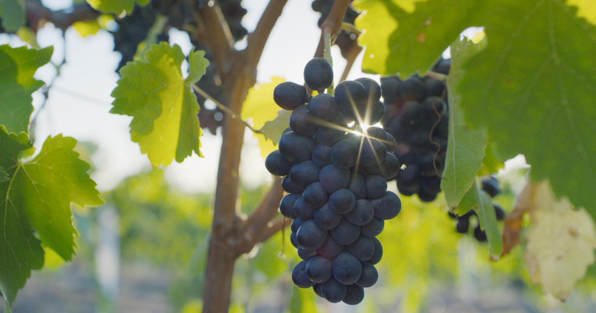 Vino (4 of 10).jpg