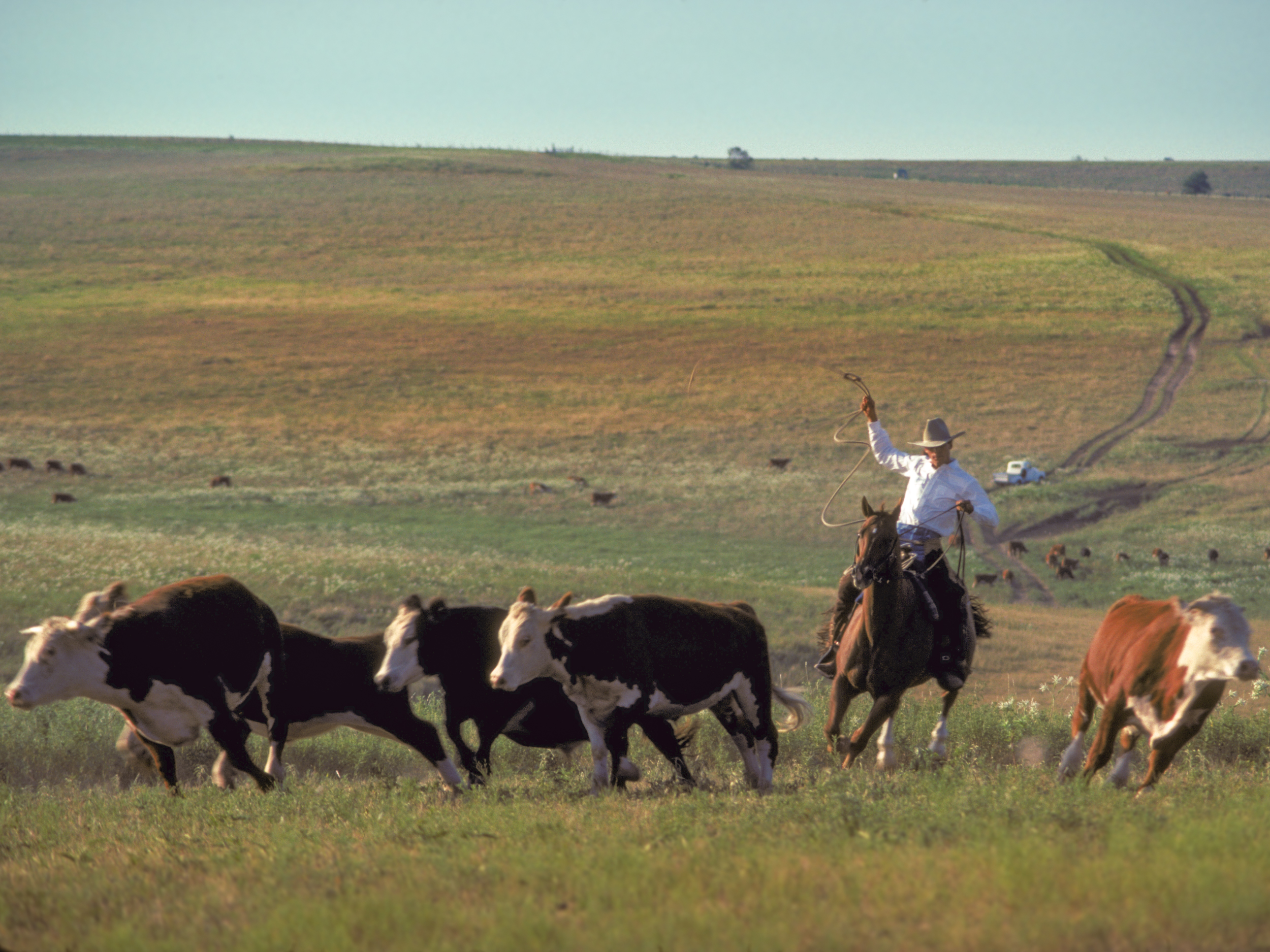 Staged cattle round-up for catalog cover Copyright © Kipp Baker, All rights reserved