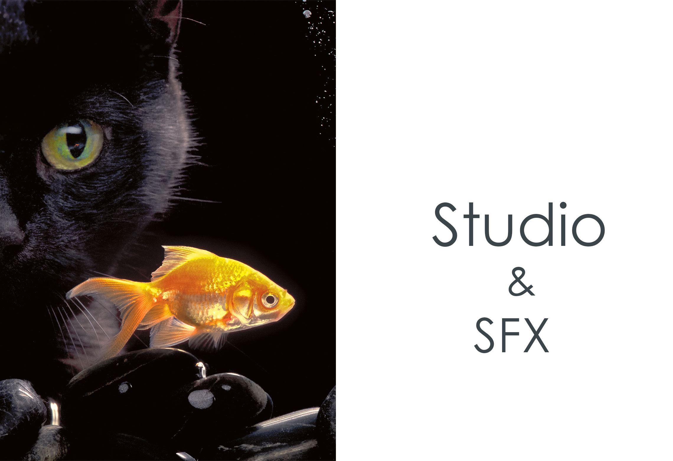 Studio & Special Effects (SFX)