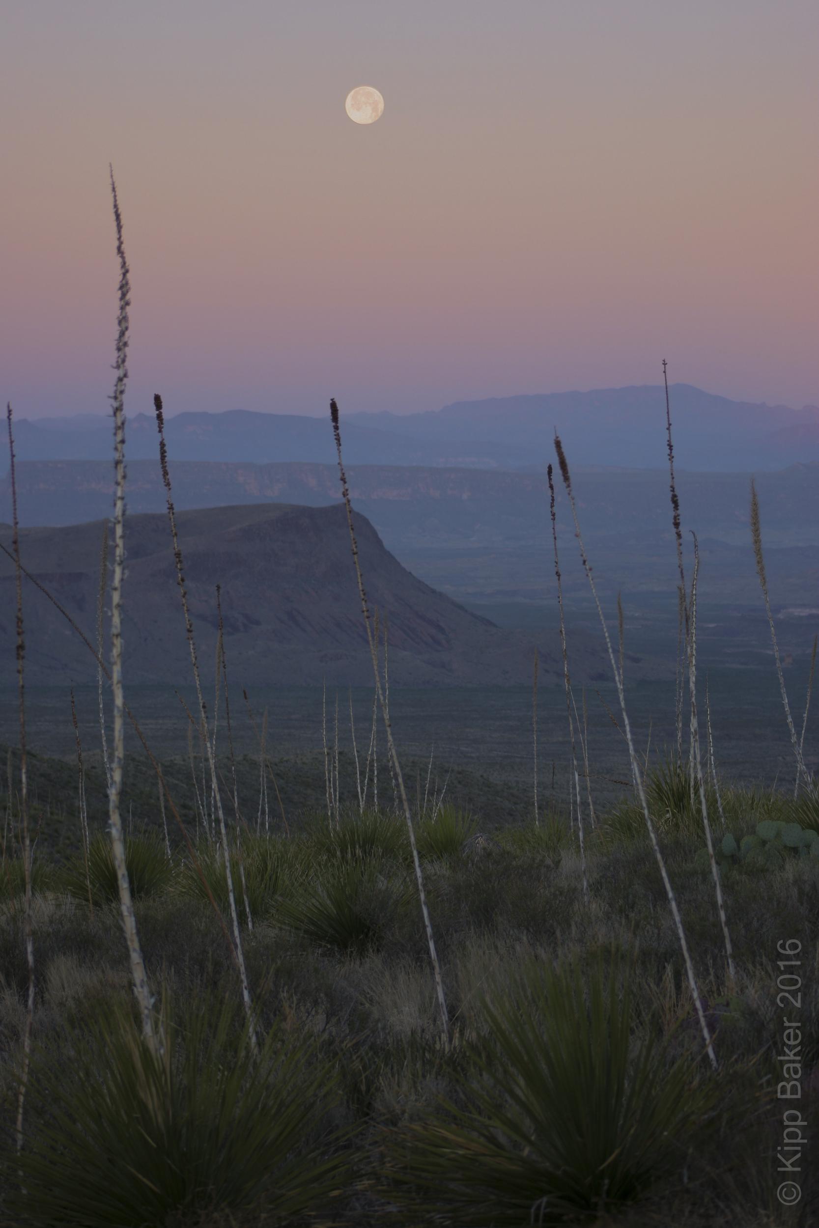 Moonset at dawn, Sotol Vista, Big Bend National Park Copyright © Kipp Baker, All rights reserved.