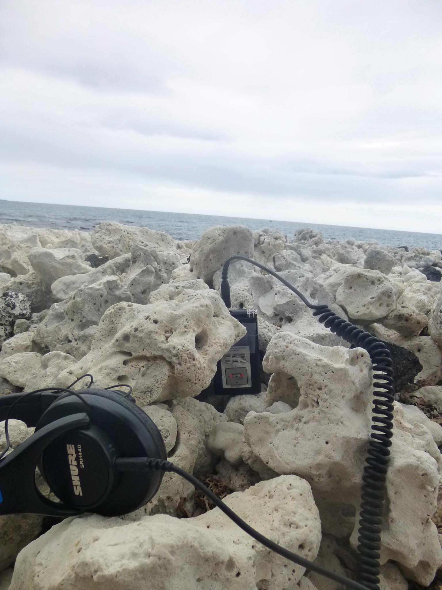 field recording/ coral Hylaeus nest sites -  Waikoloa, Big Island