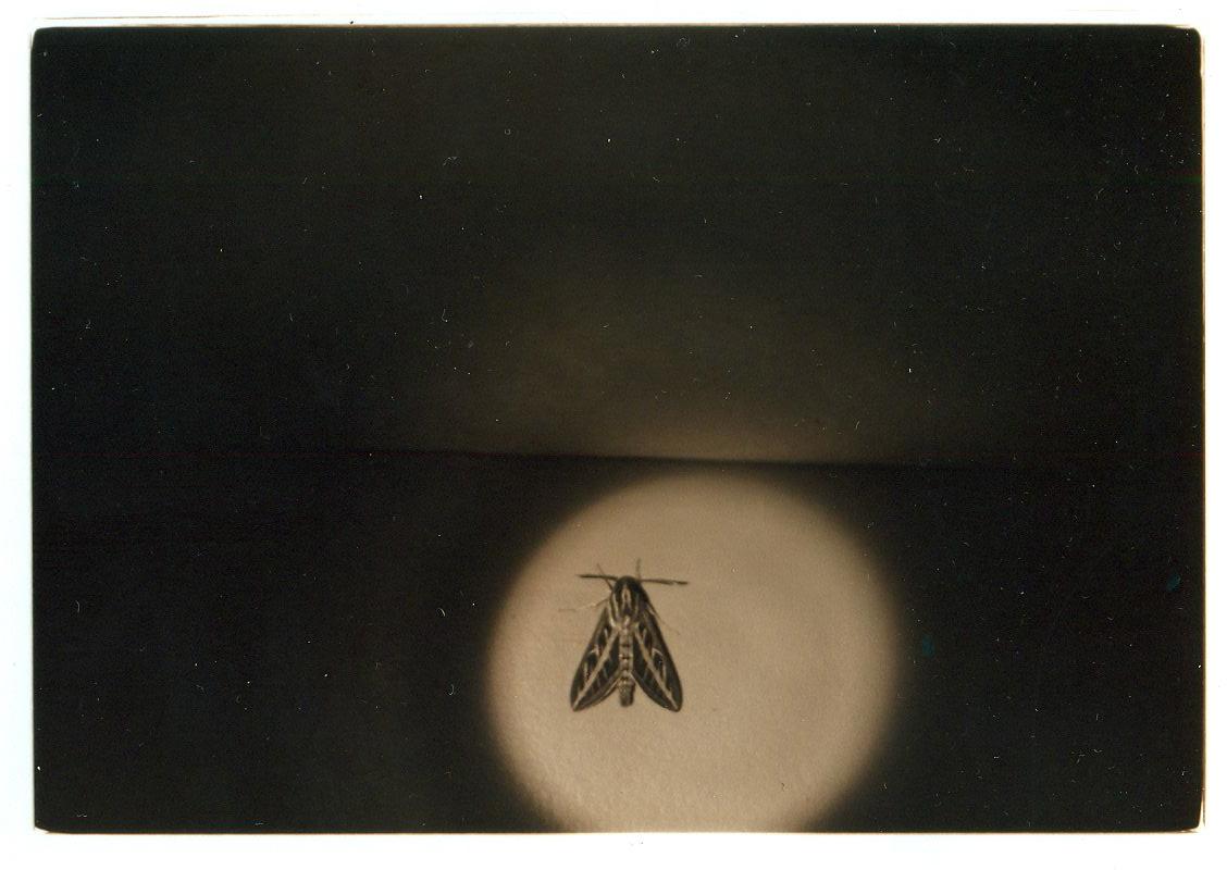 moth, joshua tree, 2012