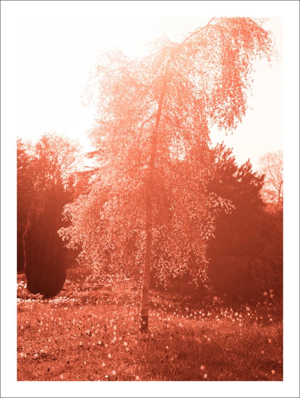 Margarete Jakschik  Untitled  2011 C-print 35 ½h x 26 ¼w in MJ005