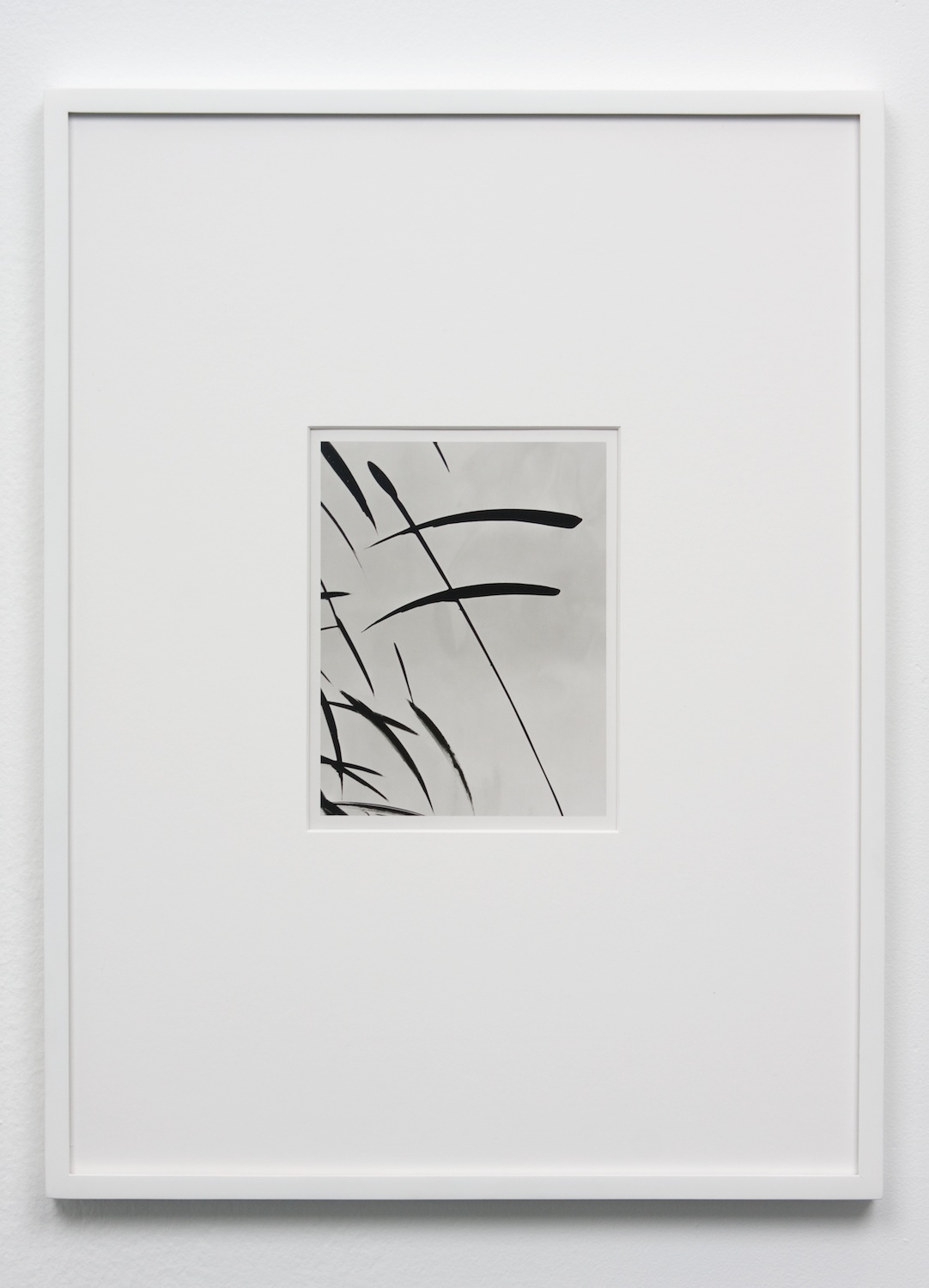 Anthony Pearson  Untitled (Solarization)  2010 Framed solarized silver gelatin photograph 17 ½h x 13 ¼w in AP240