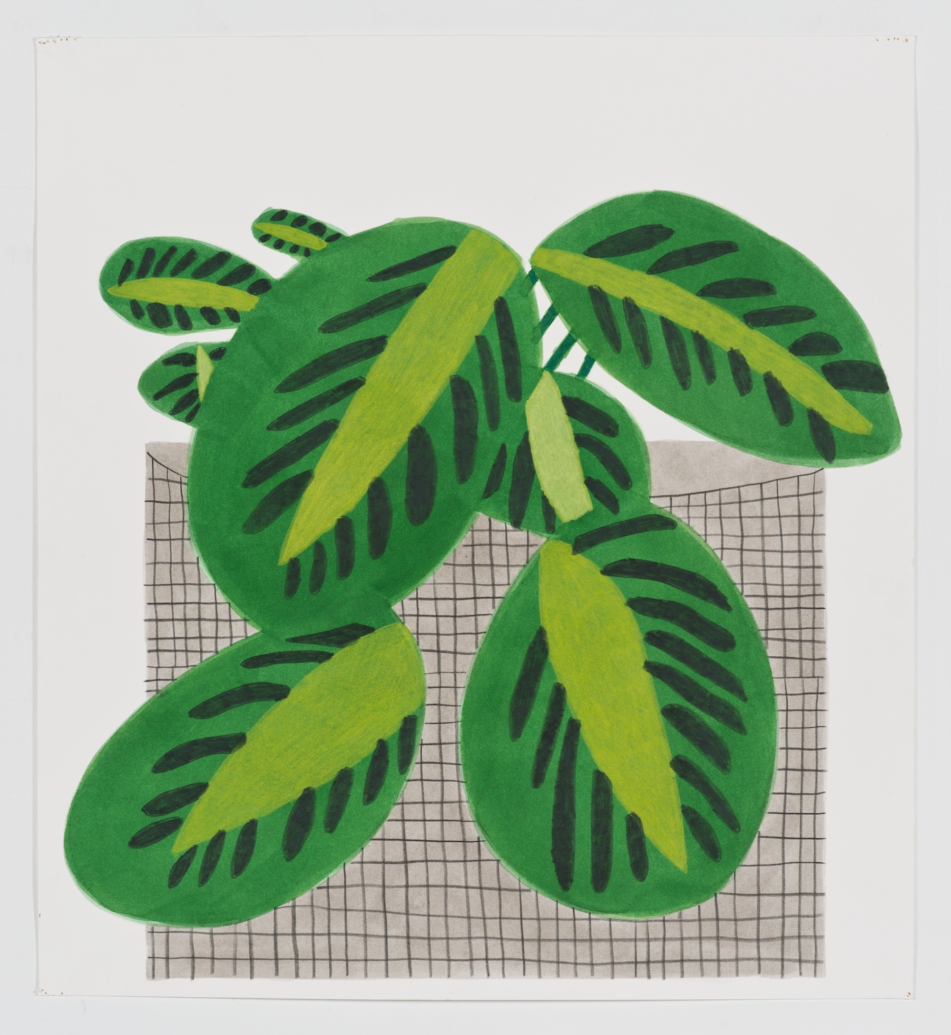 Jonas Wood  Kiwi Plant Clipping with Grid Pot  Gouache and colored pencil on paper 19 ¾h x 18w in JW171