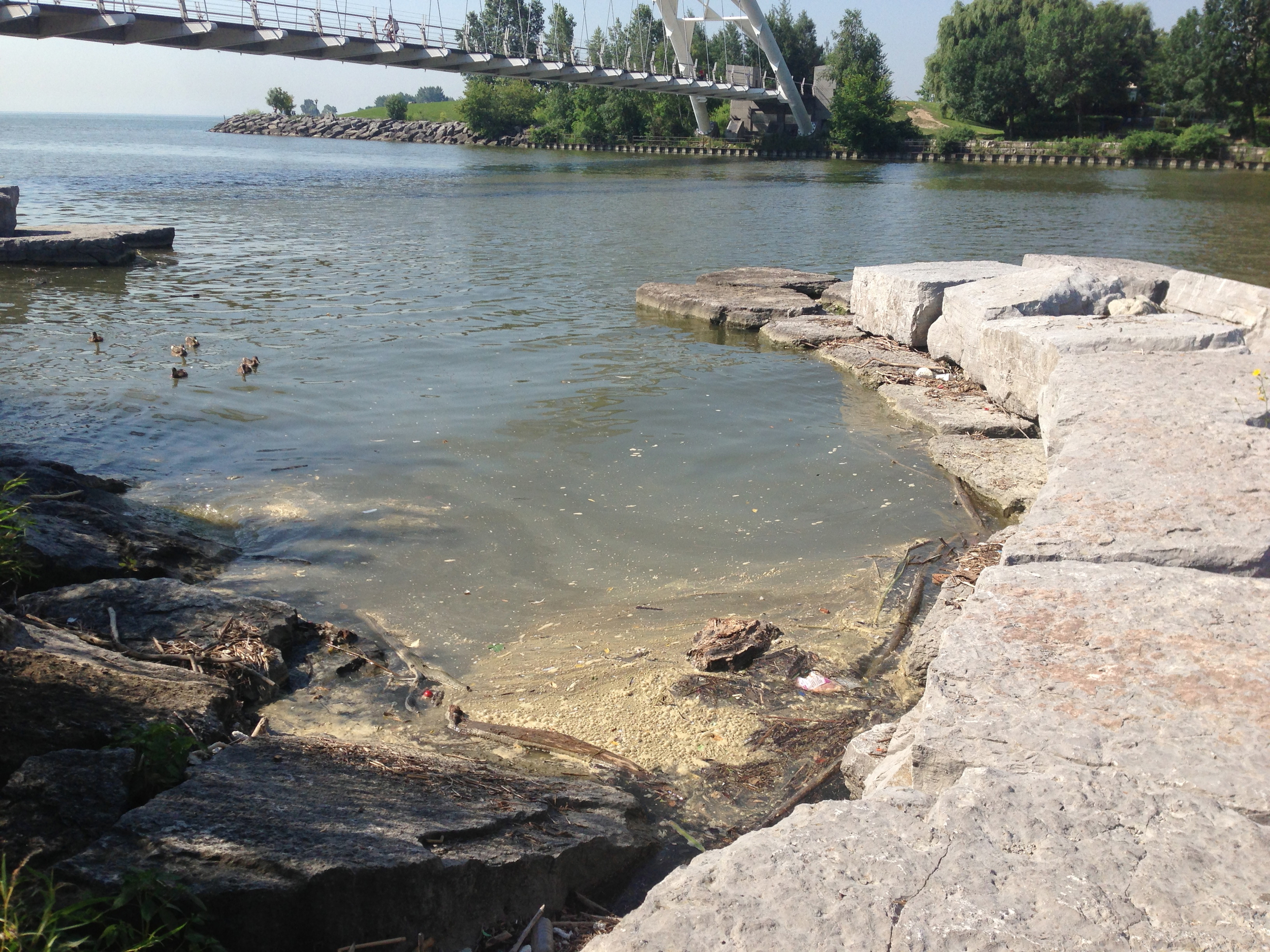 Discharge builds up along the shores of the Humber River just north of the pedestrian bridge. Photo courtesy of Lake Ontario Waterkeeper. July 16, 2013.