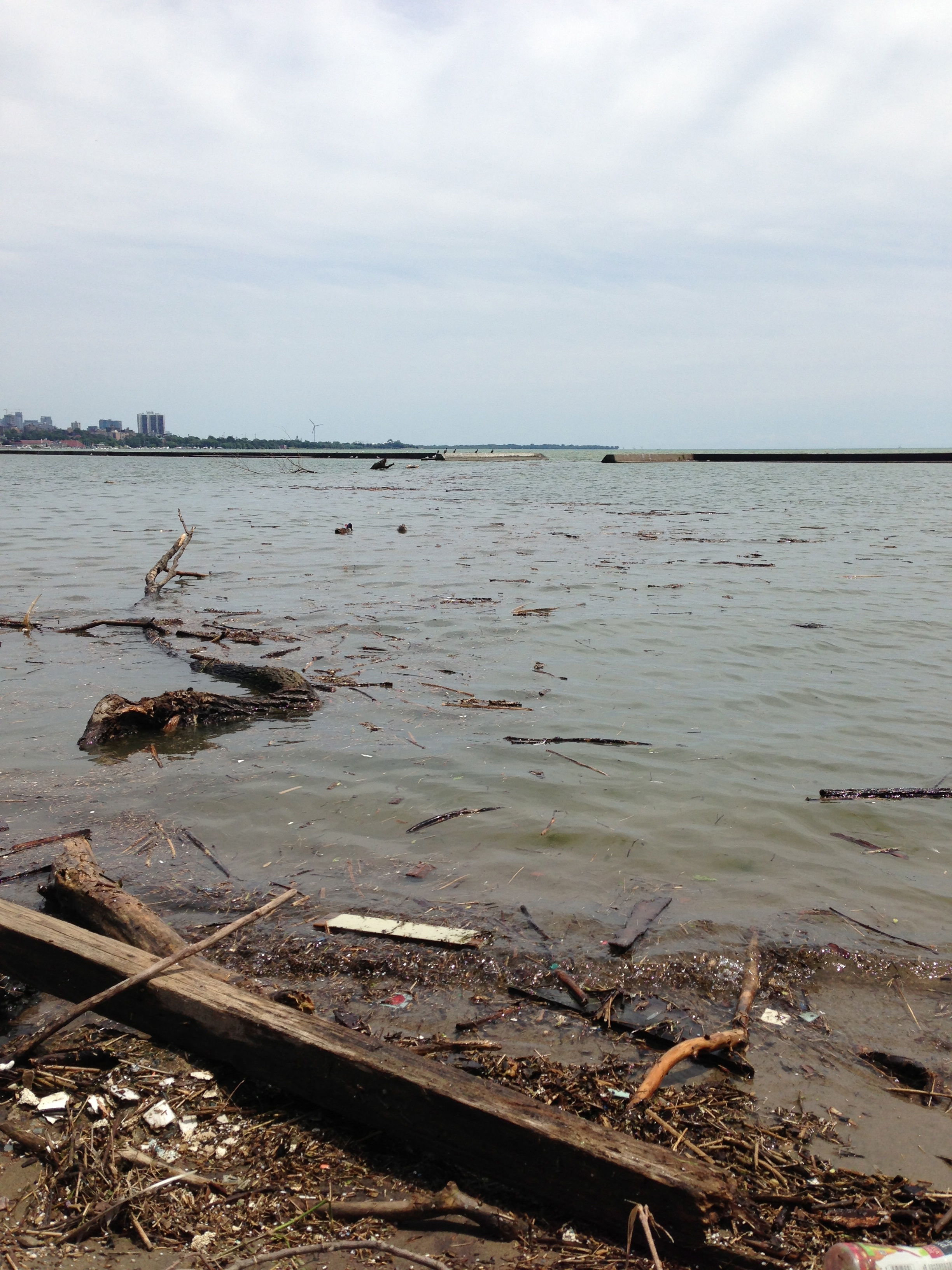 Extensive debris washing ashore near the mouth of the Humber River post-flood. Photo courtesy of Lake Ontario Waterkeeper. July 12, 2013.