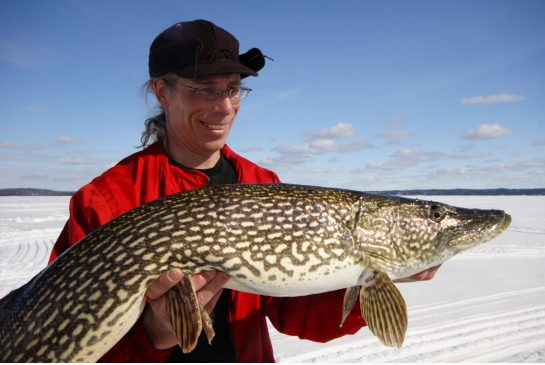 A good-sized pike caught in Wawa, Ontario. (Photo by Gord Ellis)