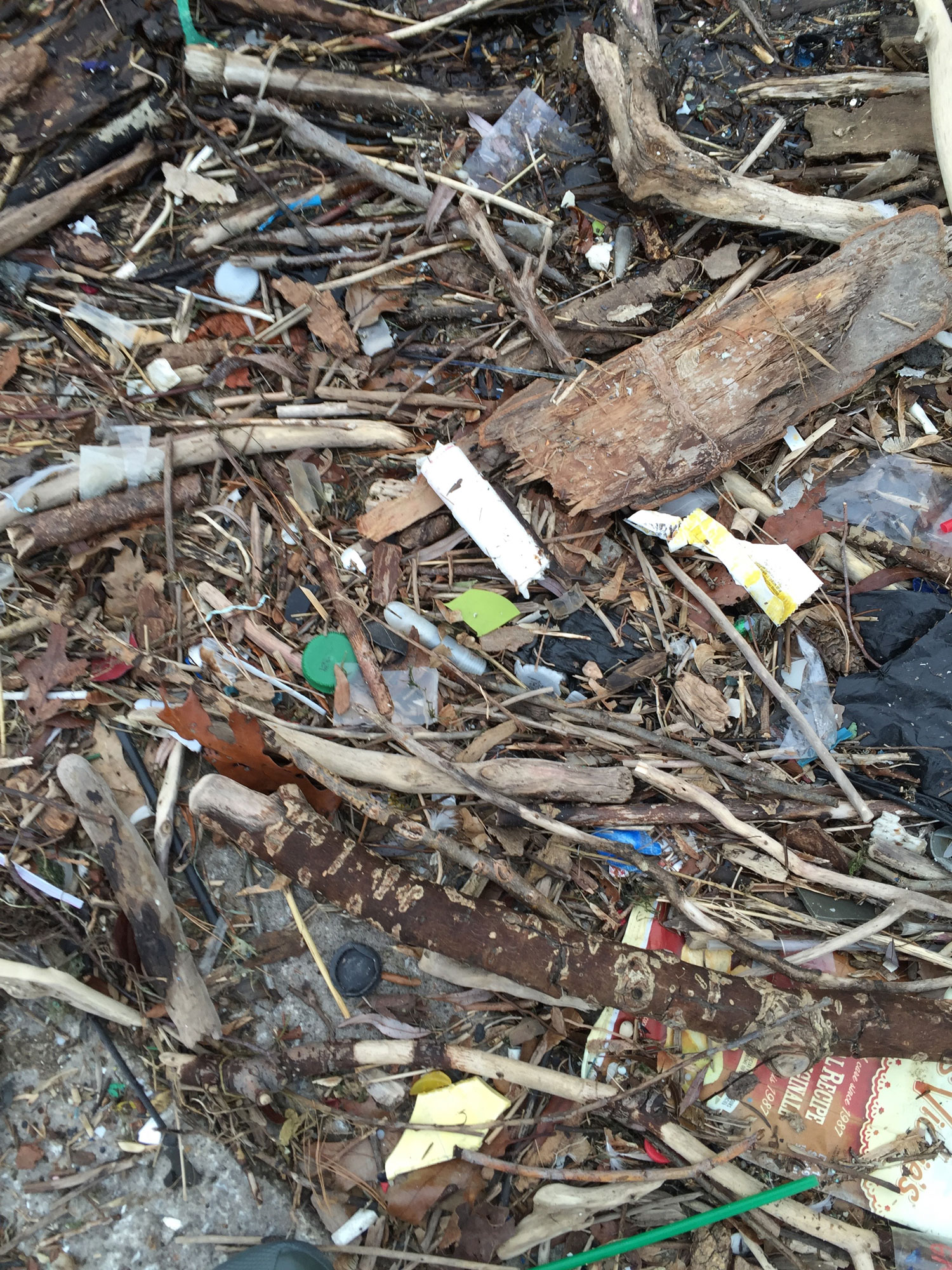 A tampon applicator buried in a mess found at Humber Bay Shores Park West,Boat Launch Area. (Photo by Michael Austin)
