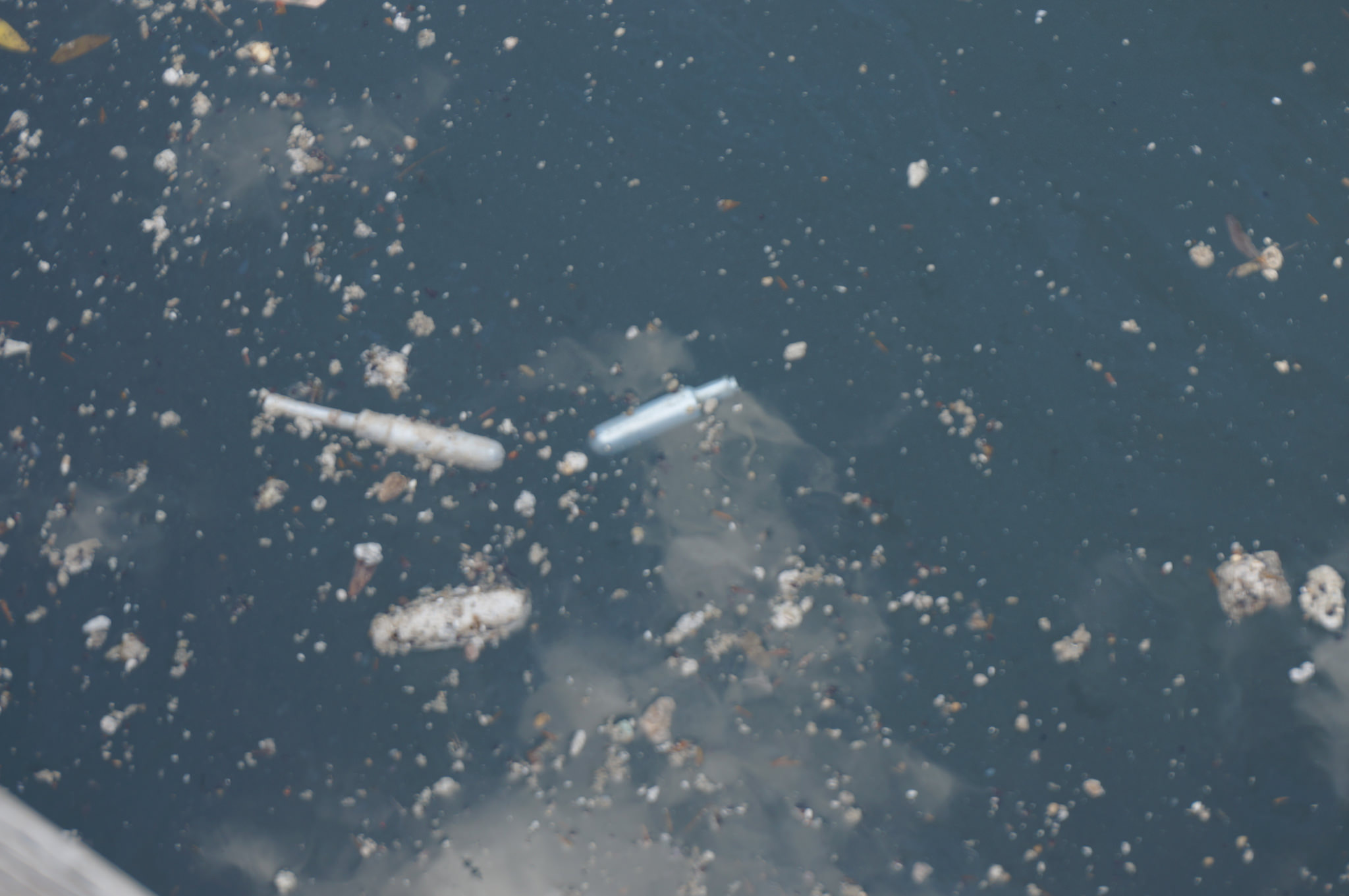 Tampon applicators and a tampon amongst floating debris. (Image by Lake Ontario Waterkeeper)
