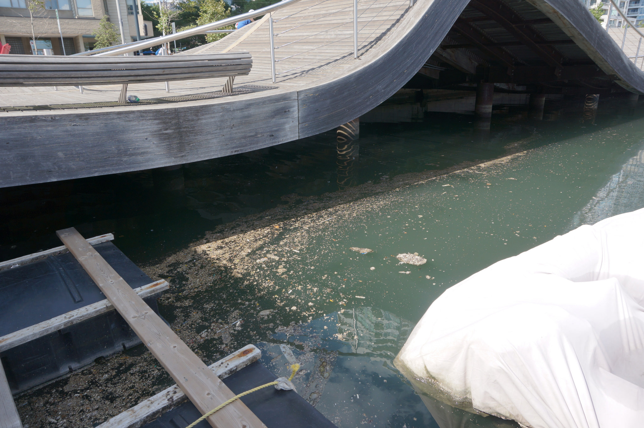 Hardened grease and fat floating under the wavedeck at Toronto's Pier 4. (Image by Lake Ontario Waterkeeper)